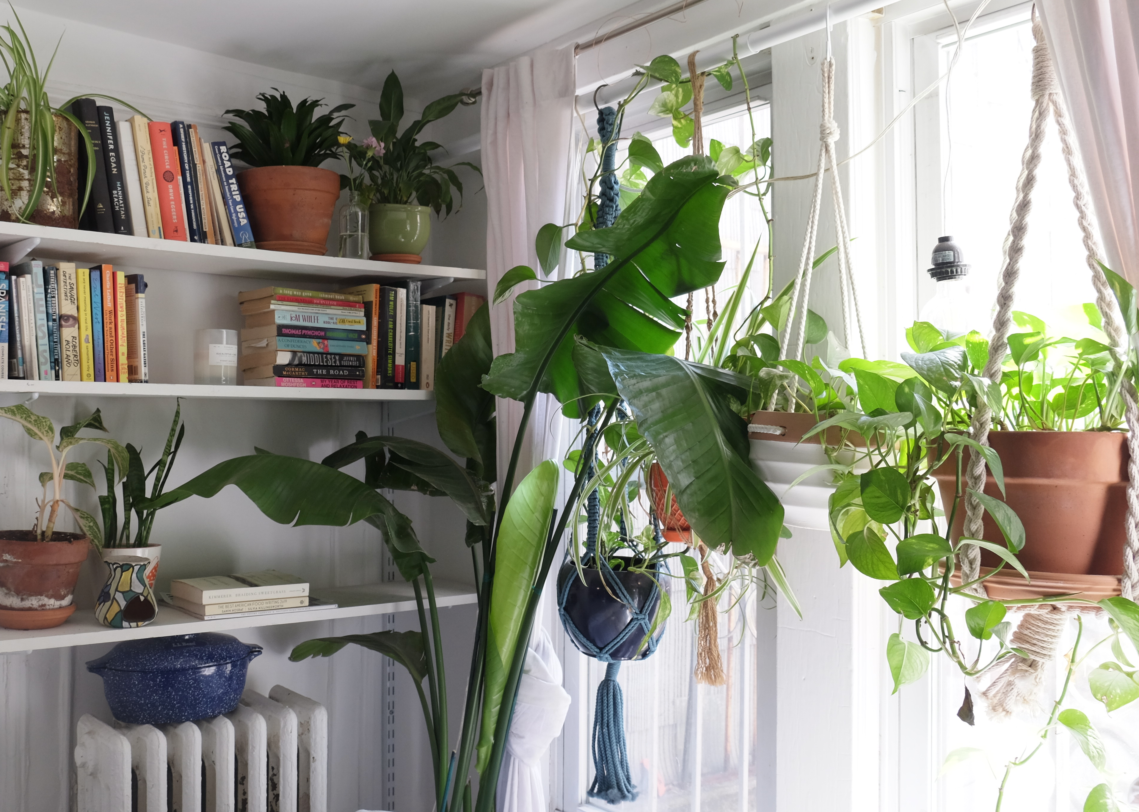 Hanging plants near a window. White shelves built into the wall contain books.