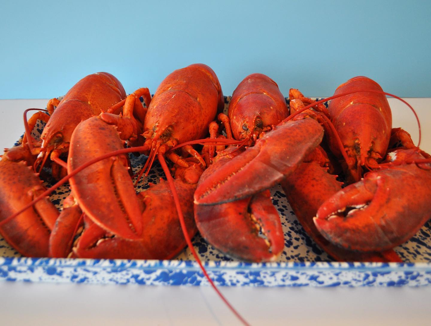 Lobsters from Gabo's