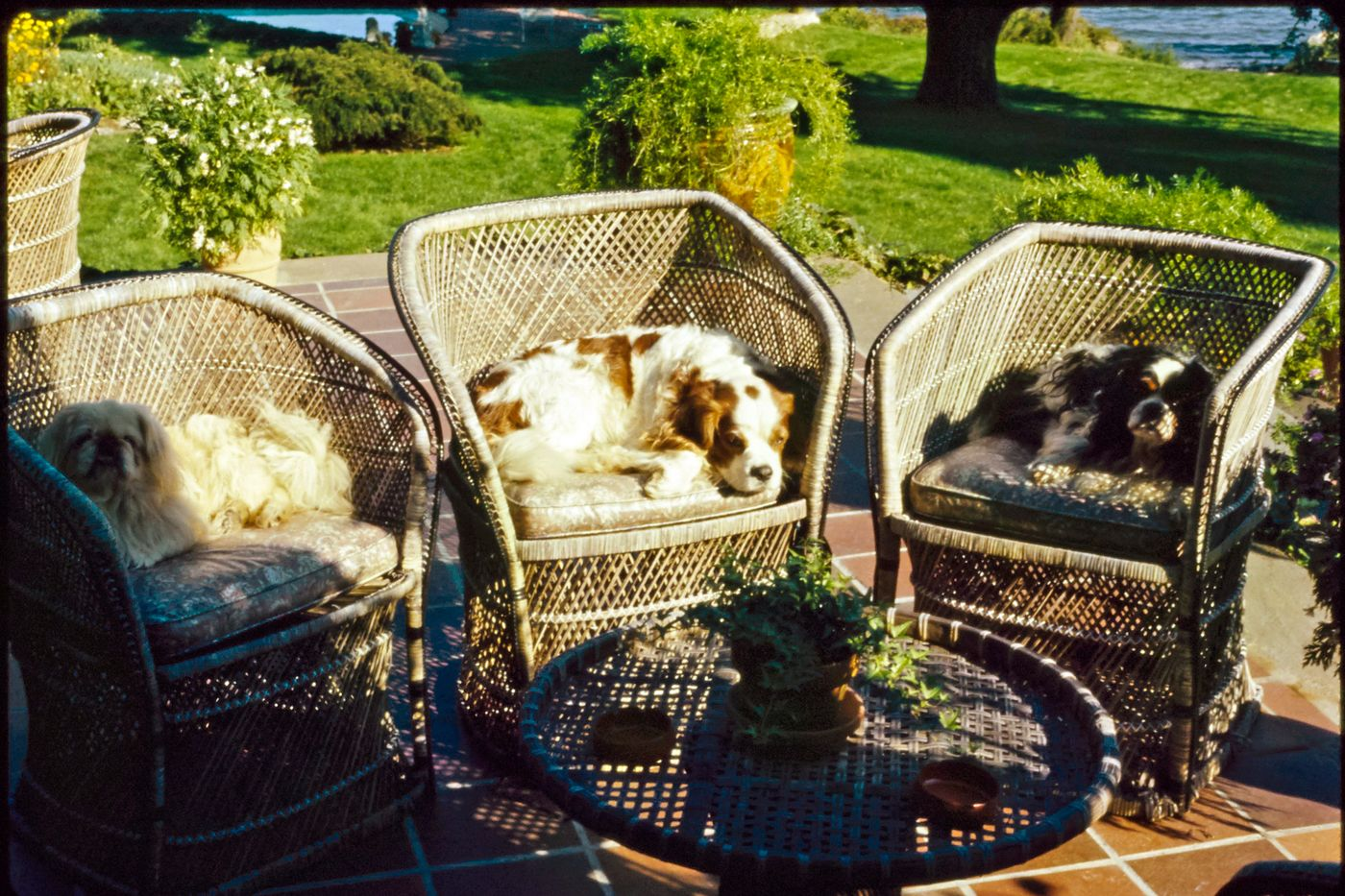 Dog on an outdoor chair.