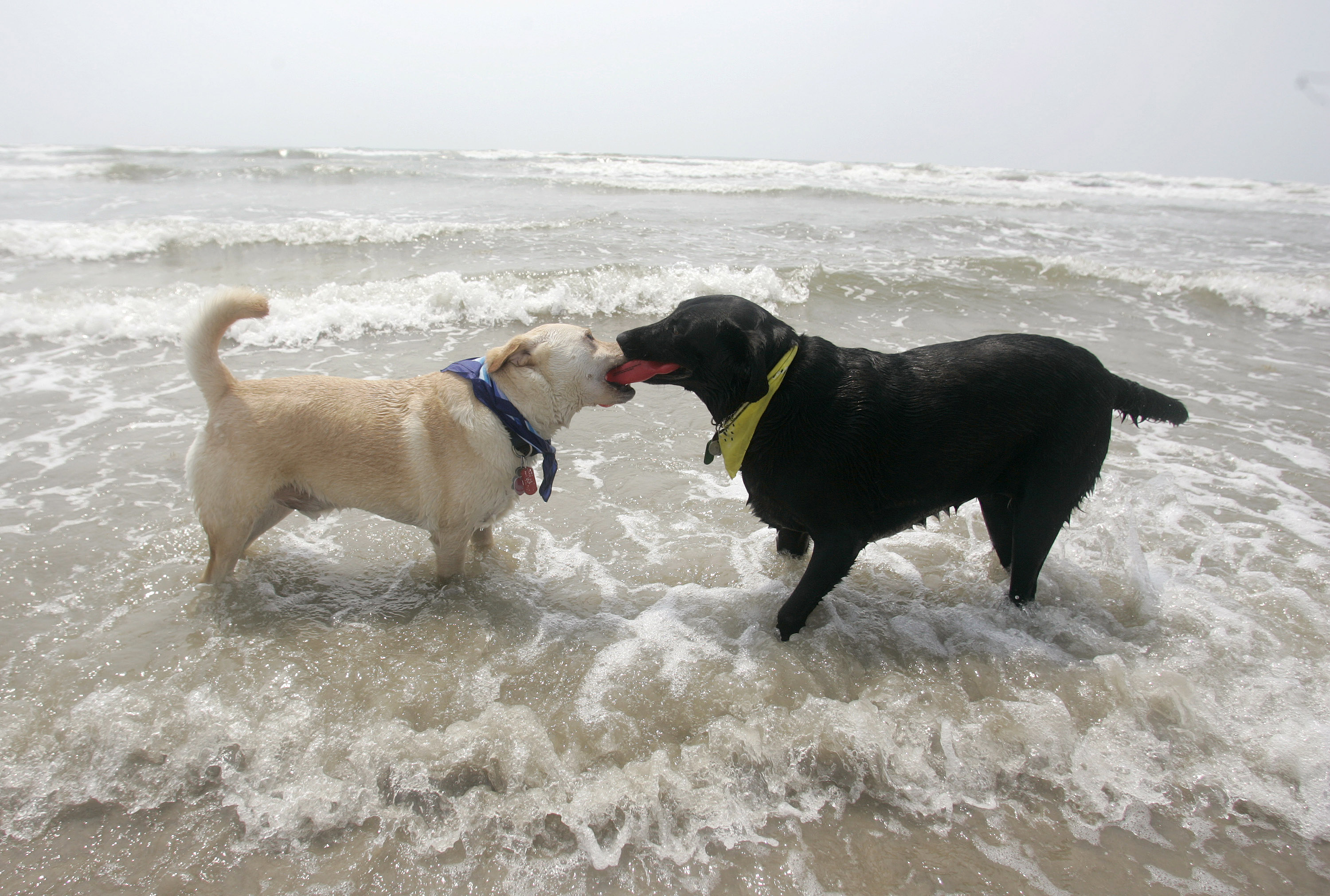 P.D. (left) and Lux at the beach in Port Aransas, Texas, May