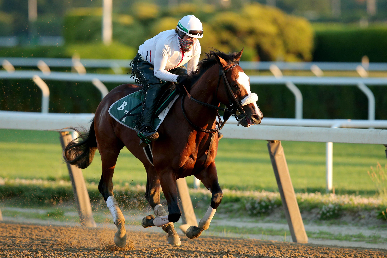 Belmont Stakes最喜欢的Tiz the Law在Belmont公园晨练时在主跑道上跑步。
