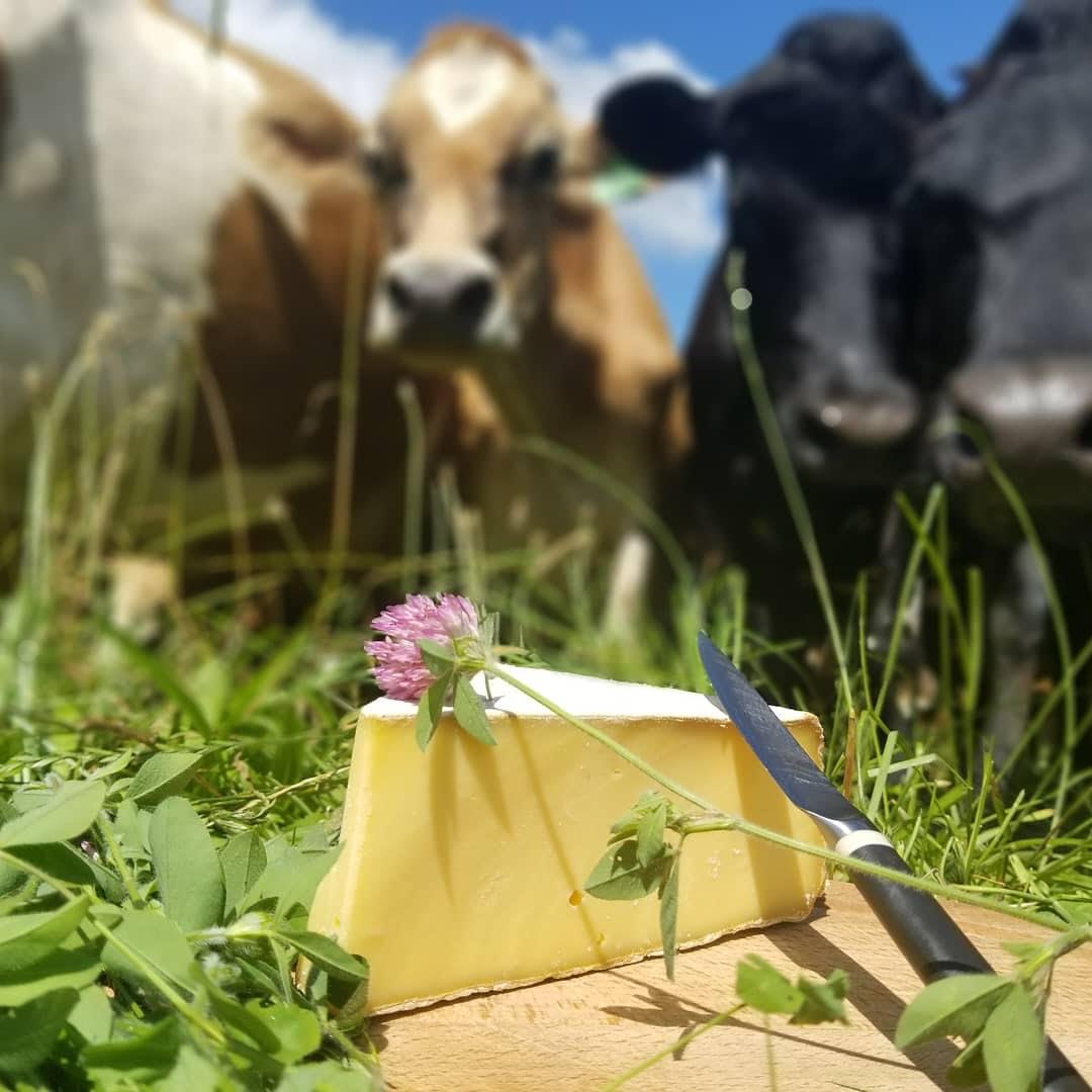 Extra aged Appalachian cheese from Meadow Creek Farm