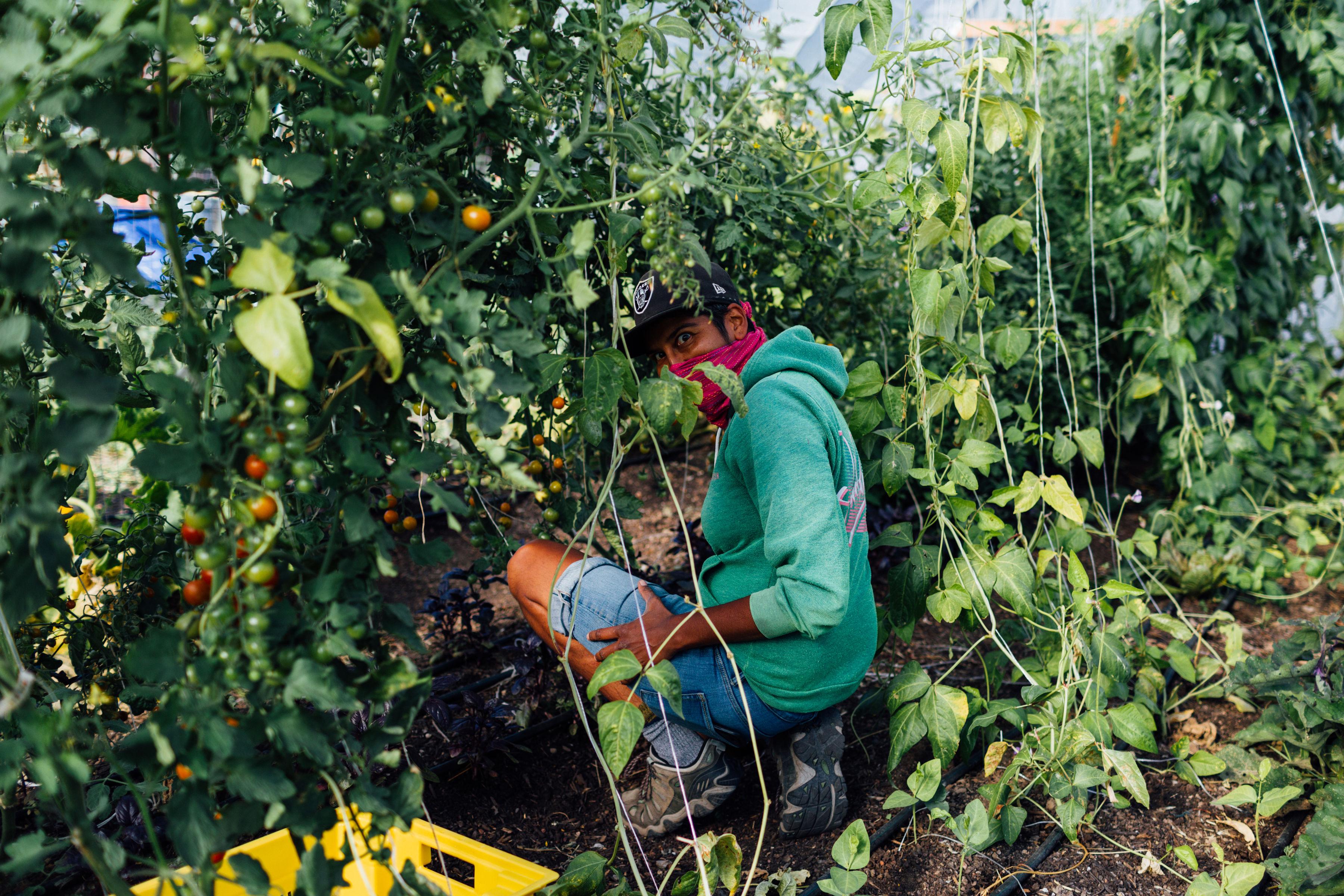 Preeti Mistry at work at Radical Family Farms