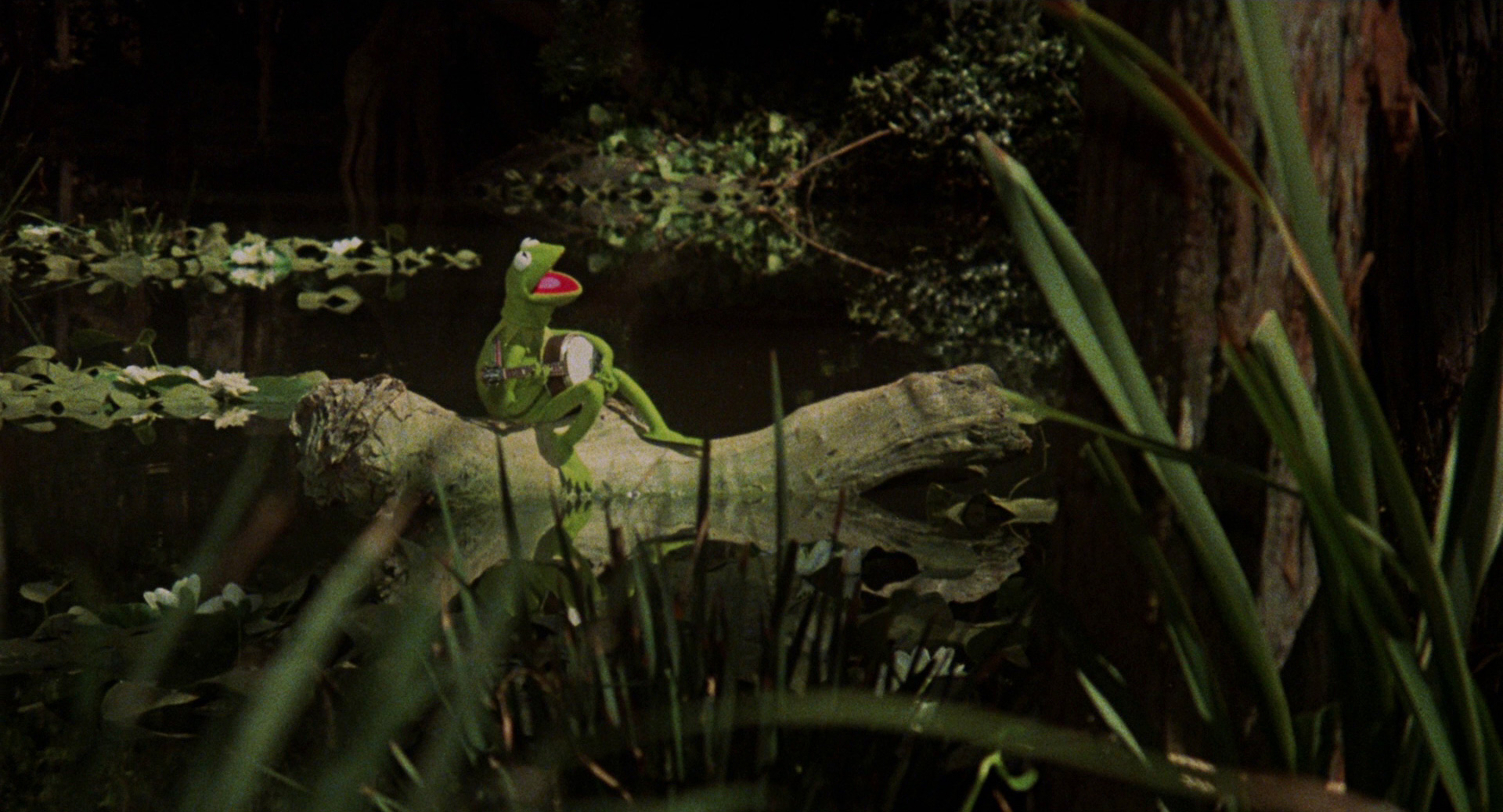 kermit sitting in his swamp and singing rainbow connection