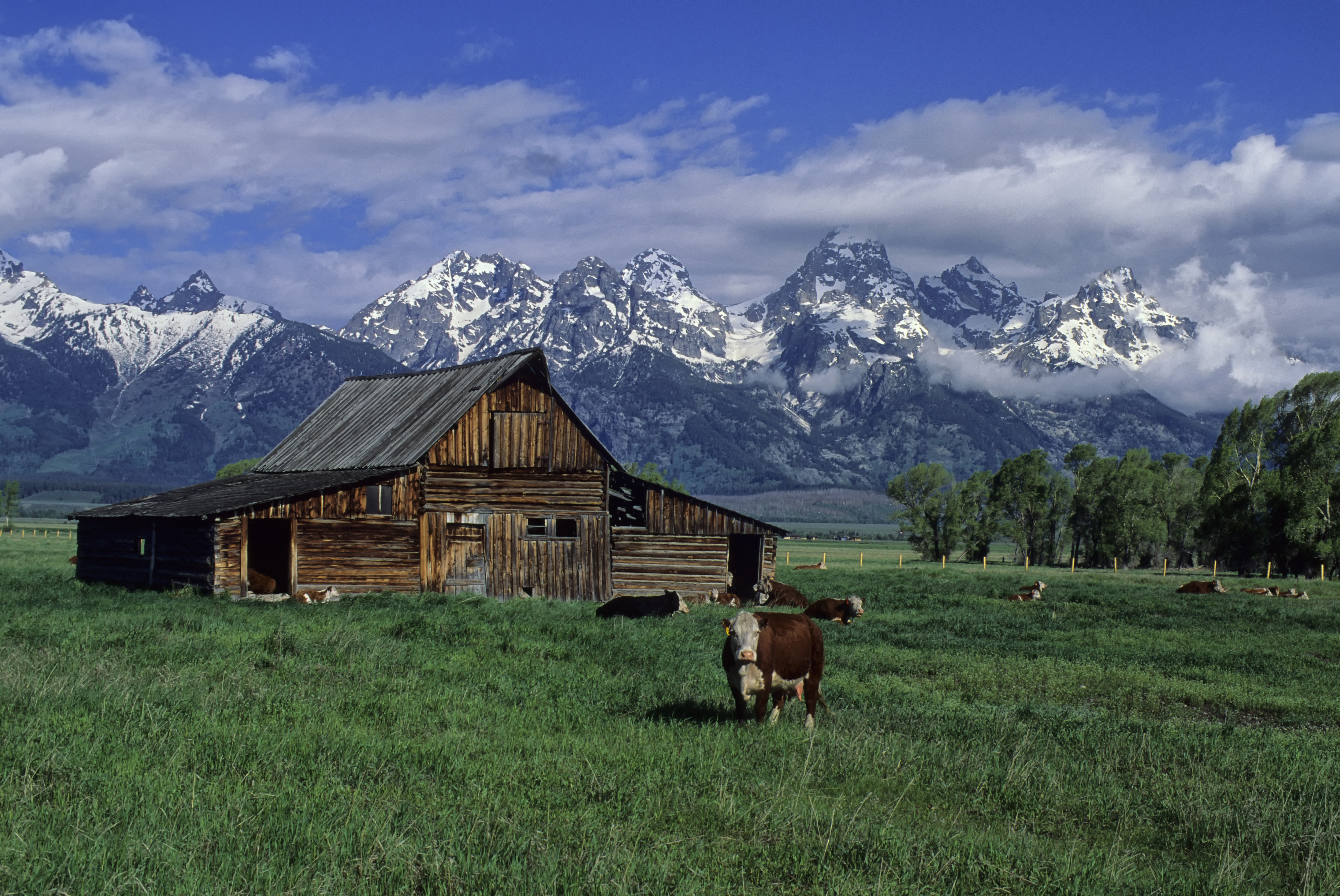 USA, Wyoming, Grand Teton National Park, Teton Range, Old...