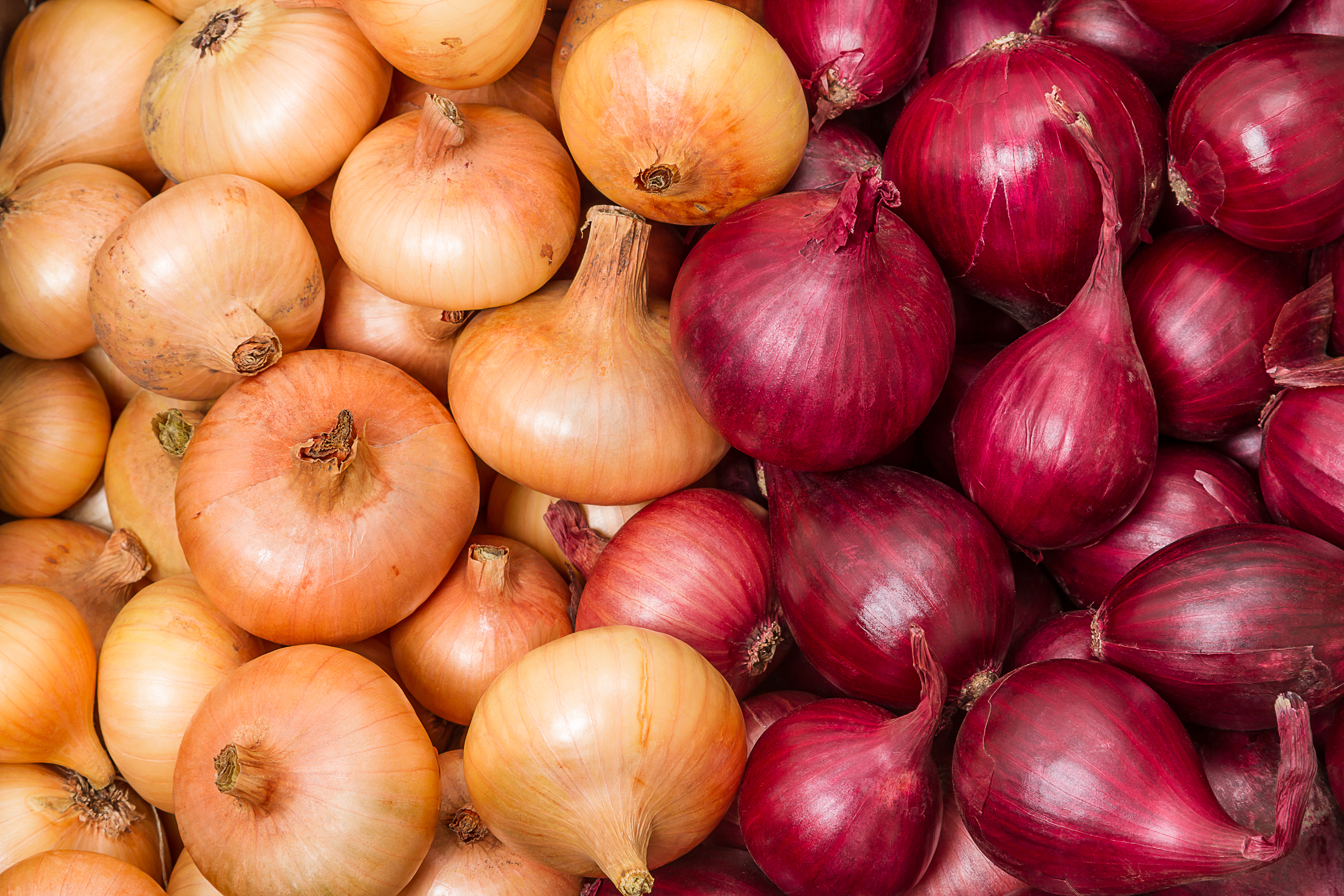 Red and yellow onions in a big pile.