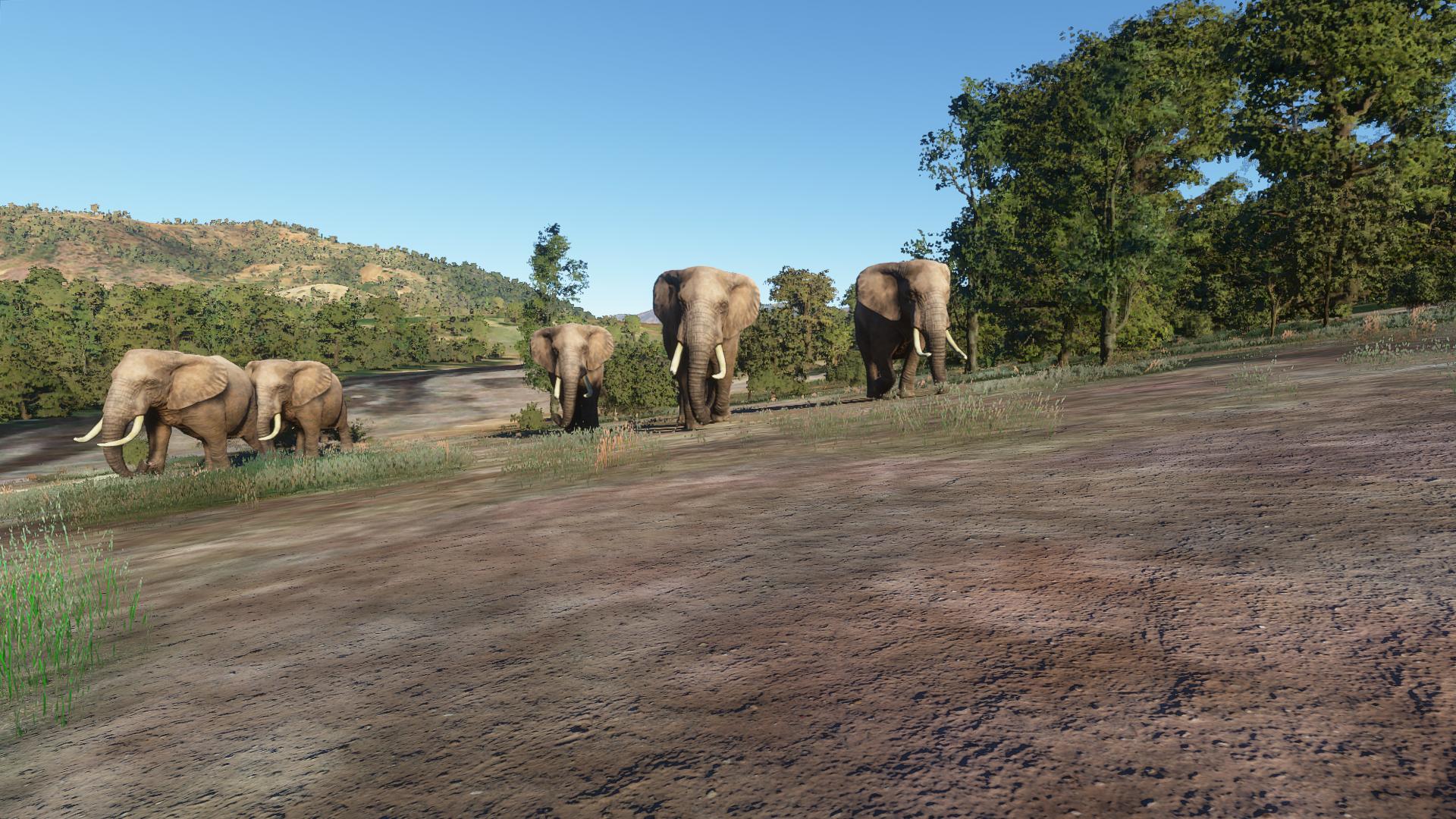 Elephants in Microsoft Flight Simulator