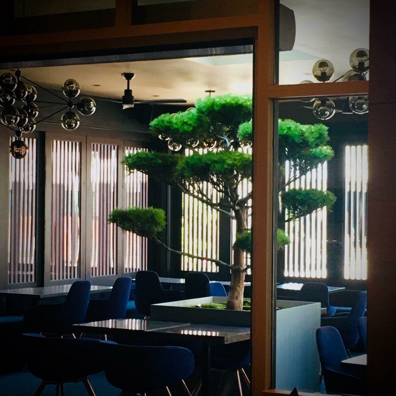 A large, grand bonsai tree featured prominently featured in the middle of the covered patio surrounded by black tables with blue cushioned chairs at Umi in Buckhead
