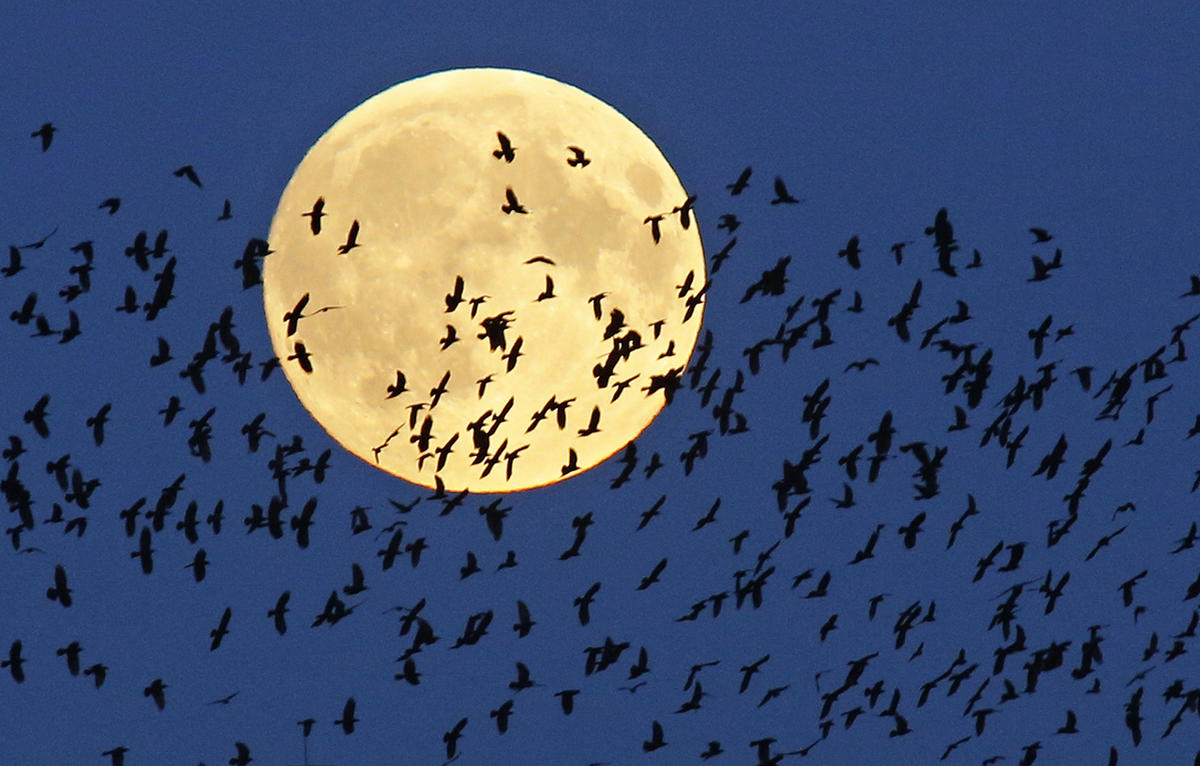 """A flock of birds fly by as a perigee moon, also known as a super moon, rises in Mir, Belarus, 95 kilometers (60 miles) west of capital Minsk, Belarus, late Sunday, Sept. 27, 2015. The full moon was seen prior to a phenomenon called a """"Super Moon"""" eclipse"""