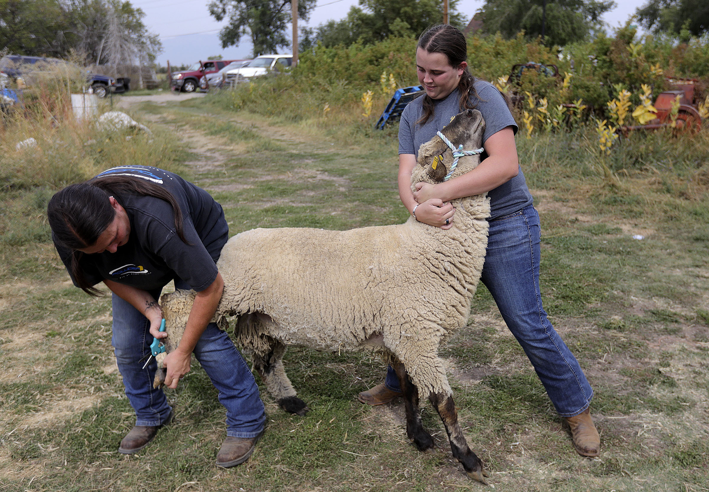 Danielle Blanch trims the hoofs of a sheep as her daughter, Teala McCully, helps hold it in Hooper, Weber County, on Friday, Sept. 18, 2020. Interior Secretary David Bernhardt was in Salt Lake City Friday for a number of events, including listening in to the concerns of the agricultural community.