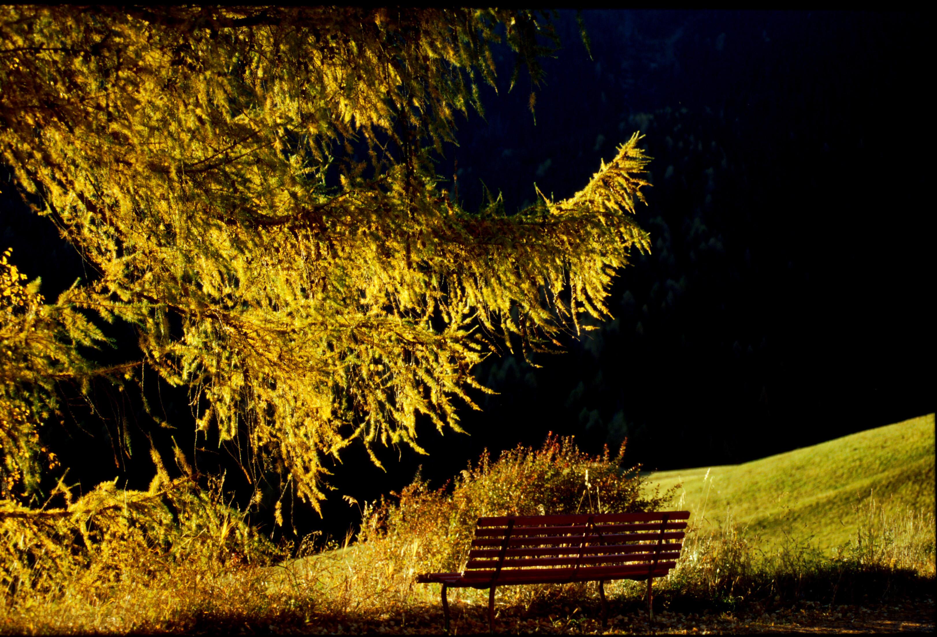 """Hidden away under the leaves, one flower still remains."""