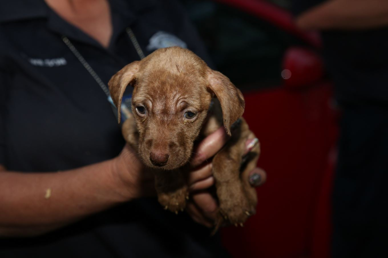 Multiple dogs were rescued from a home Sept. 21, 2020, in Thornton Township.