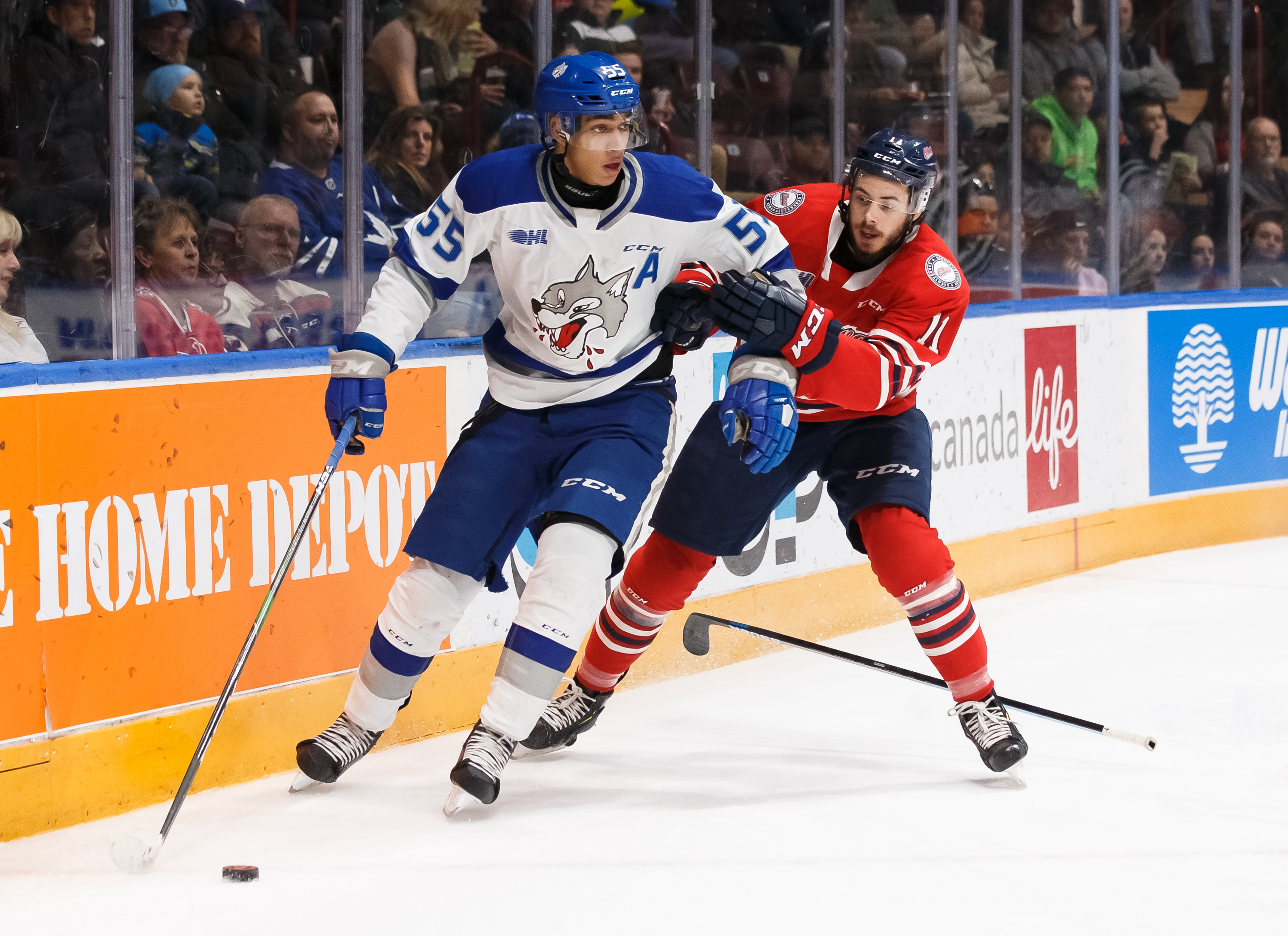 Quinton Byfield #55 of the Sudbury Wolves protects the puck from Giovanni Vallati #11 of the Oshawa Generals during an OHL game at the Tribute Communities Centre on February 7, 2020 in Oshawa, Ontario, Canada.