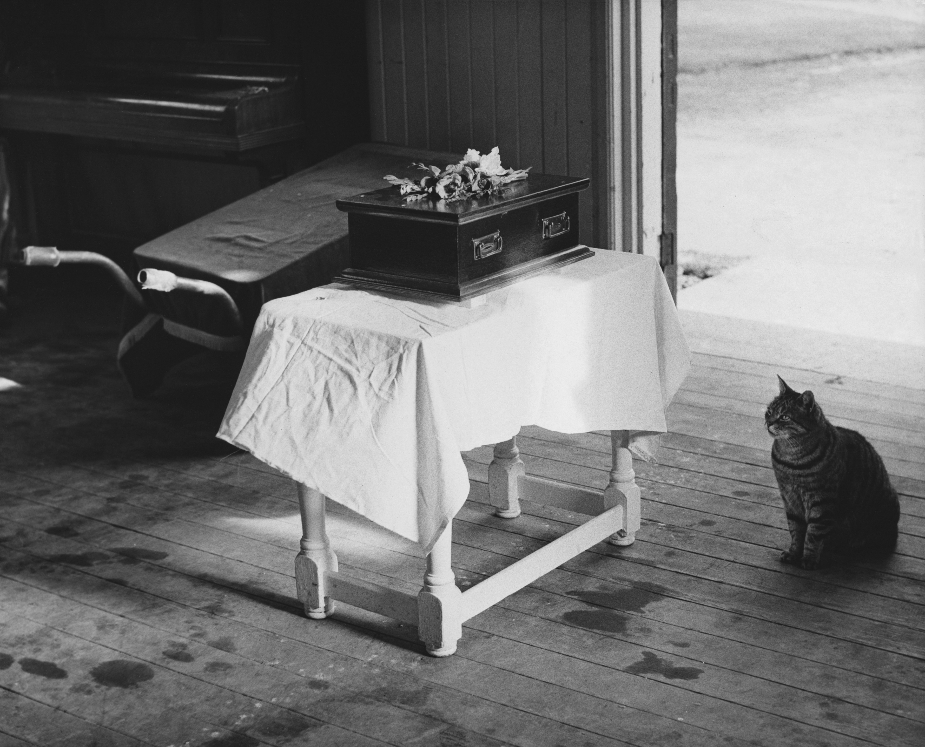 Cat Pays Final Respects