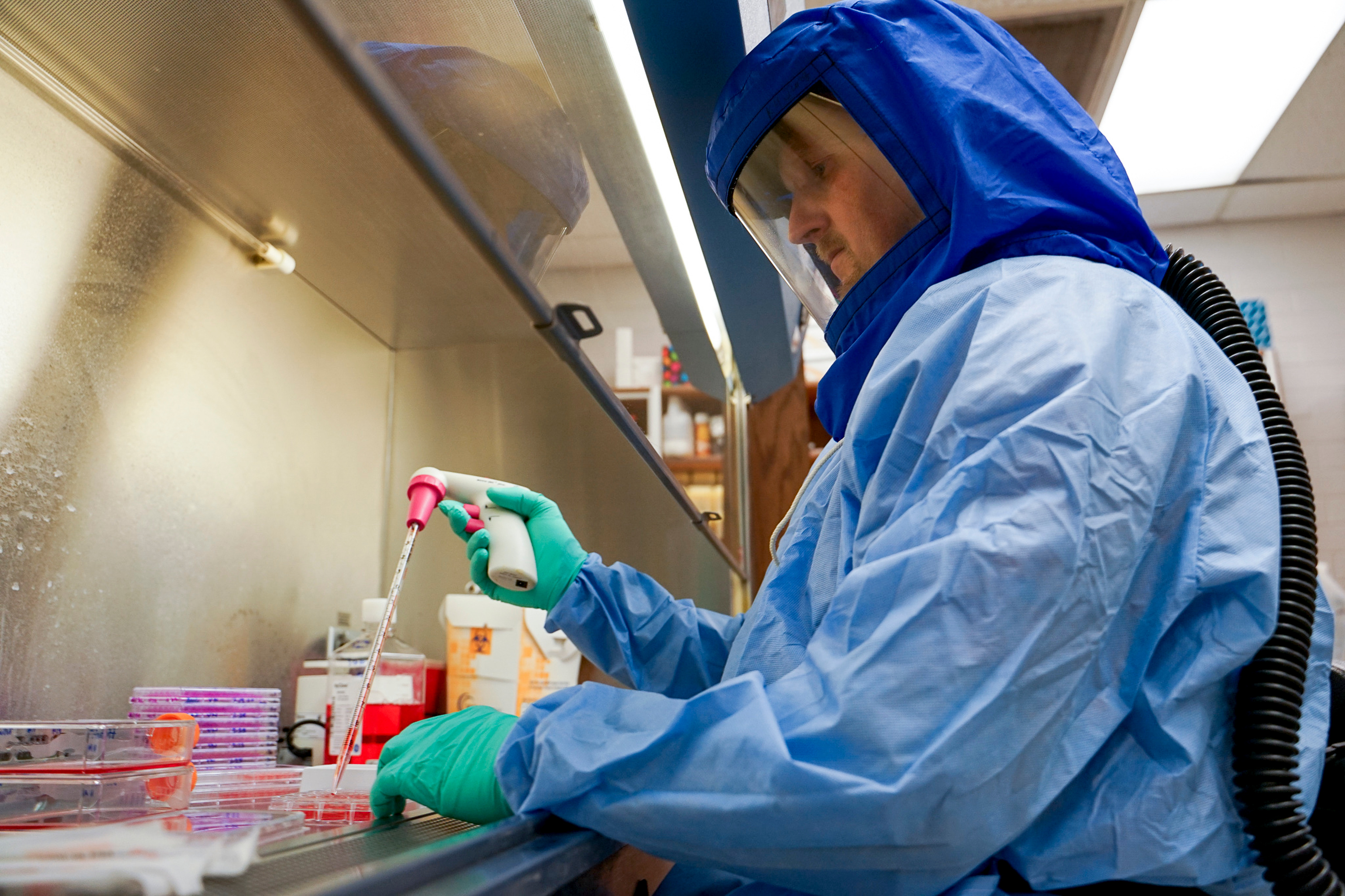 Brett Hurst, a virologist, works at Utah State University's Institute for Antiviral Research on March 18, 2020. Genetically engineered golden Syrian hamsters developed by Utah State University researchers have played a key role in animal trials of a possible vaccine to protect against the virus that causes COVID-19.