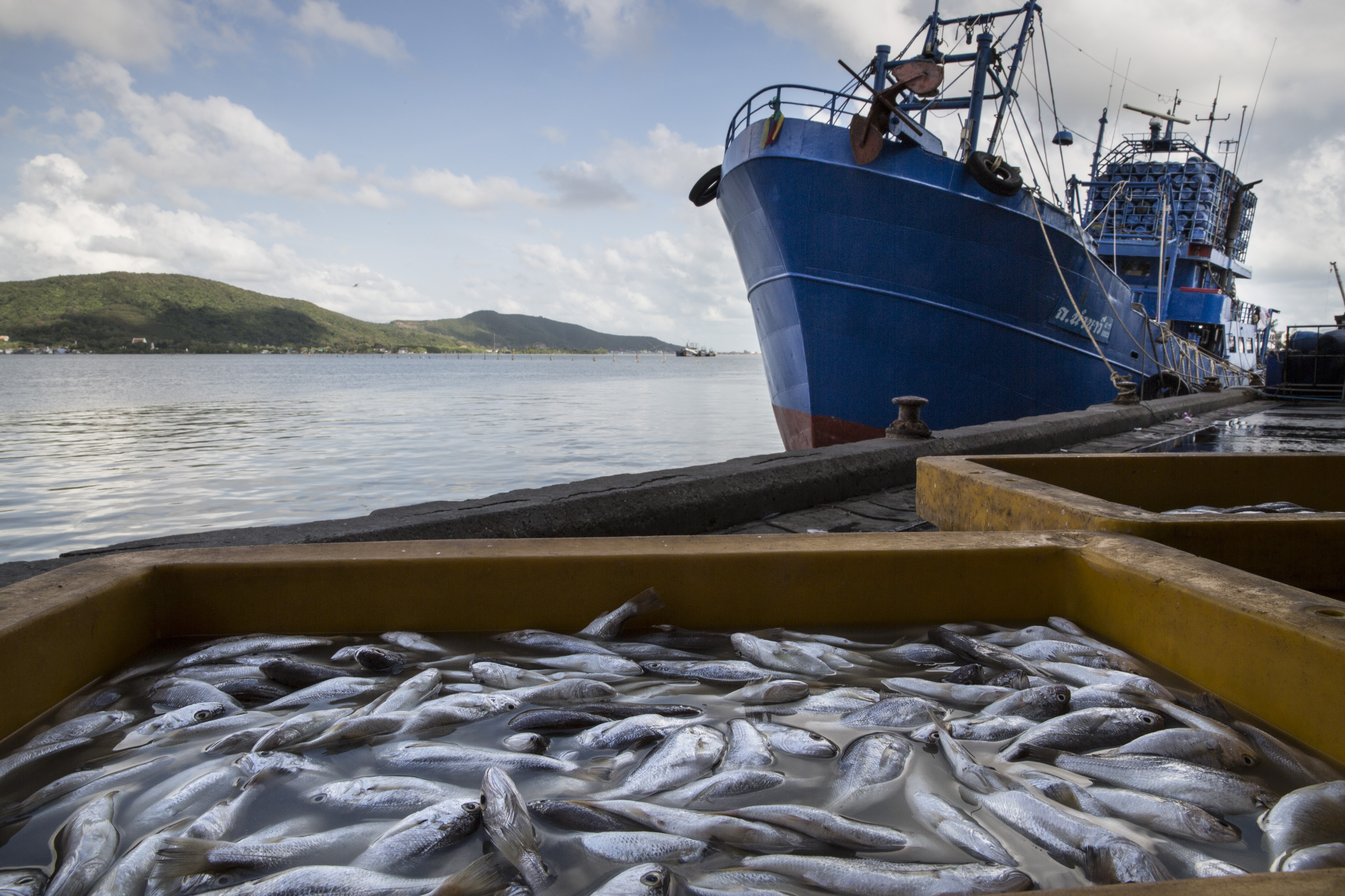 Thailand's Seafood Industry Under Scrutiny