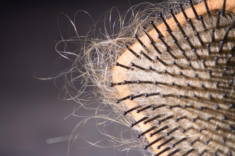 A hairbush full of hair.