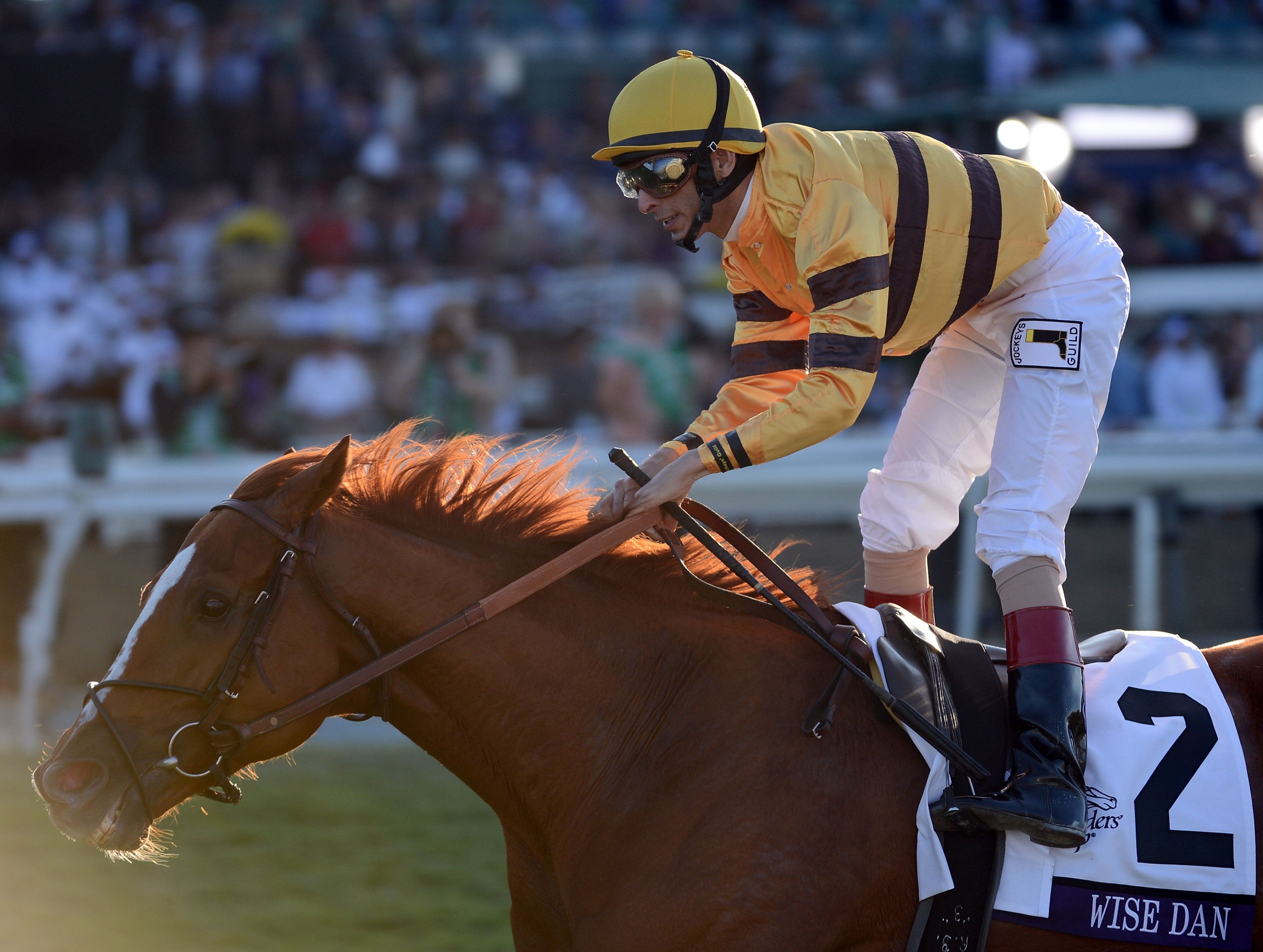 Wise Dan -- 2012 Champion Turf Horse, Champion Older Male and Horse of the Year