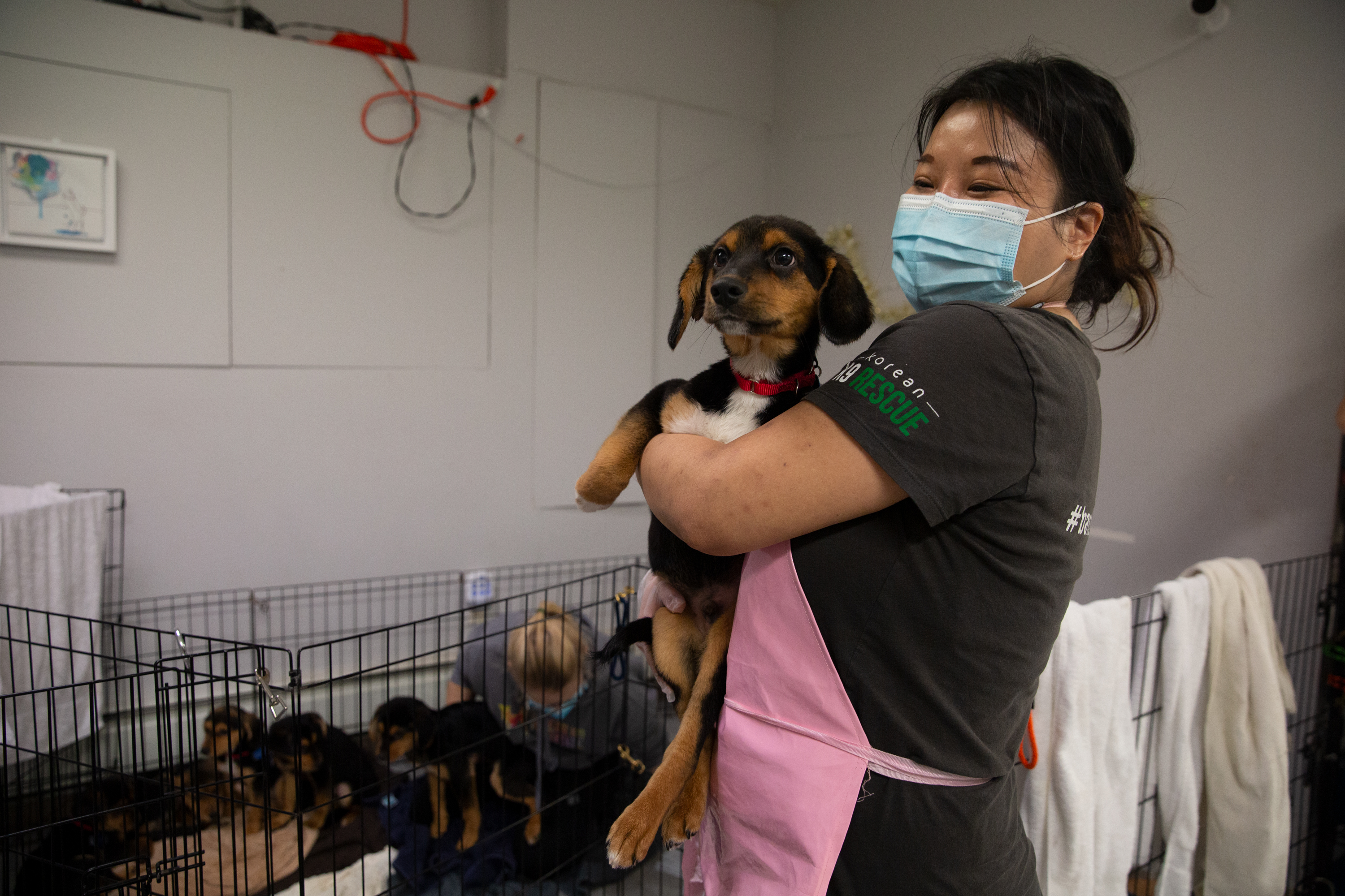 Korean K9 Rescue founder Gina Boehler holds a beagle mix named Suho after the dog arrived to the Astoria business from Korea, Jan. 5, 2021.