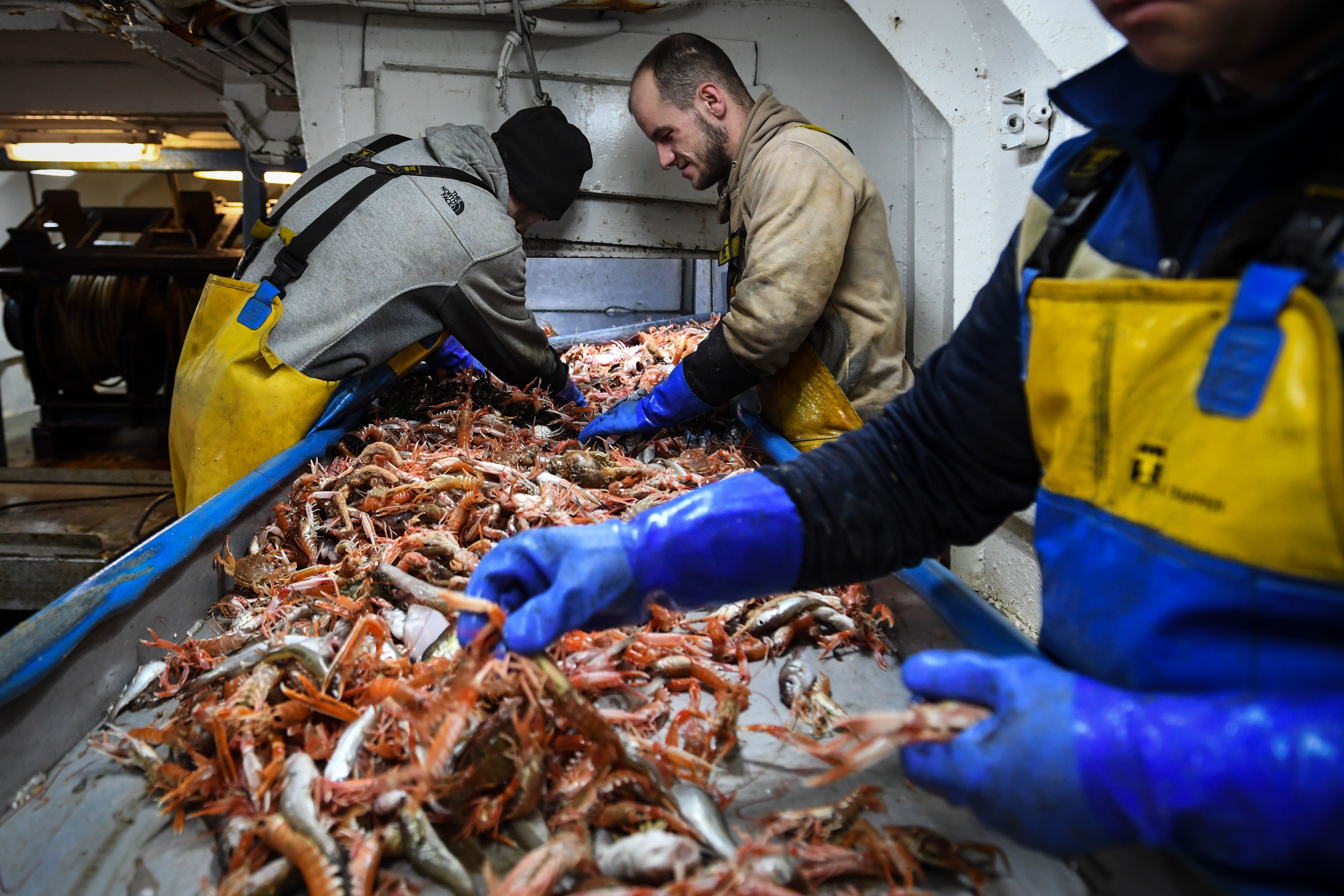 Shellfish traders pick through catch in the UK