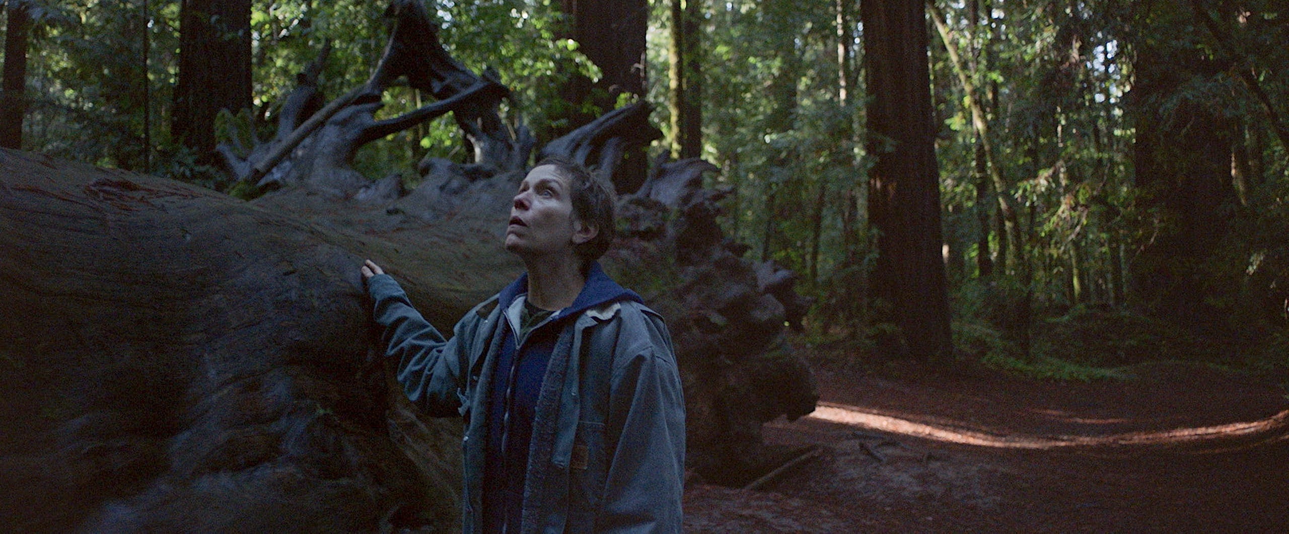 Frances McDormand stands by a gigantic fallen tree in the woods in Nomadland