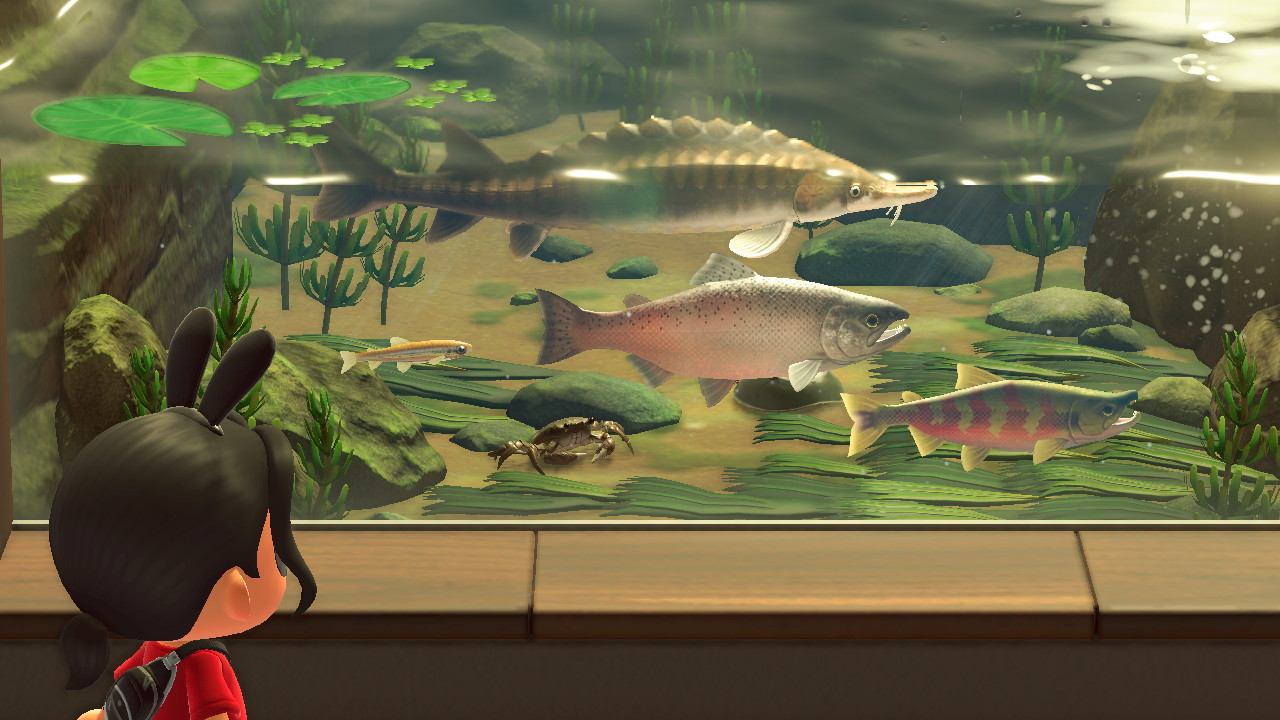 An Animal Crossing character stares at a Salmon, a Mitten Crab, and some other fish in a river-like aquarium