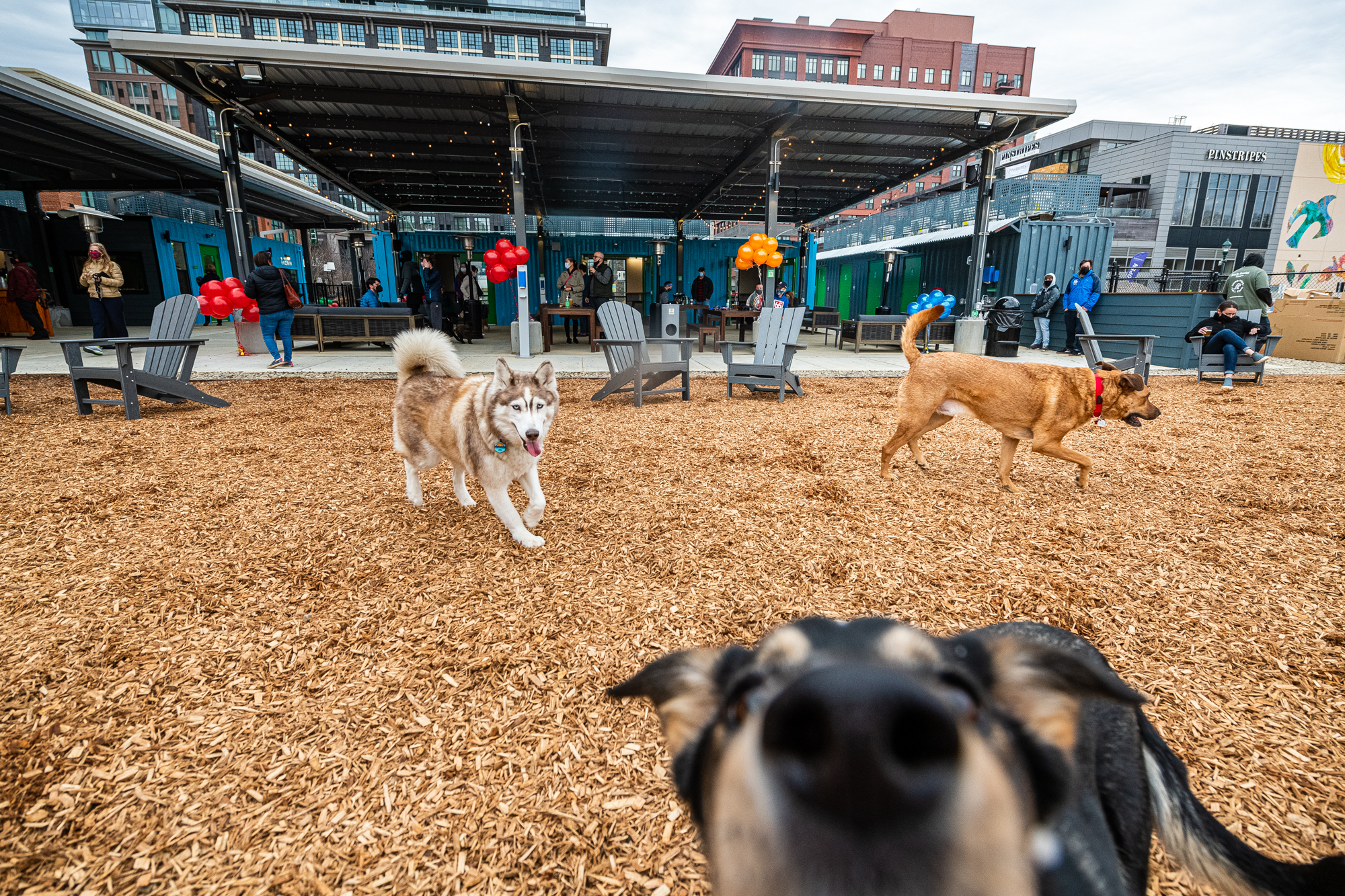 Dogs play on mulch while their owners drink draft beers at Bark Social