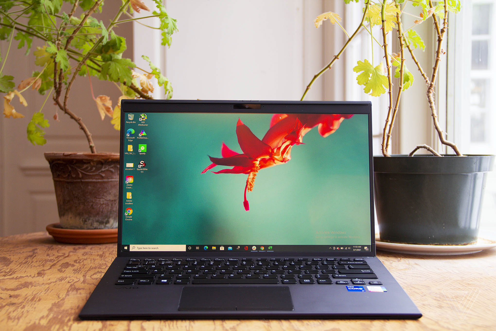 The Vaio Z laptop on a table with two plants in the background. The screen displays a red flower on a blue background.