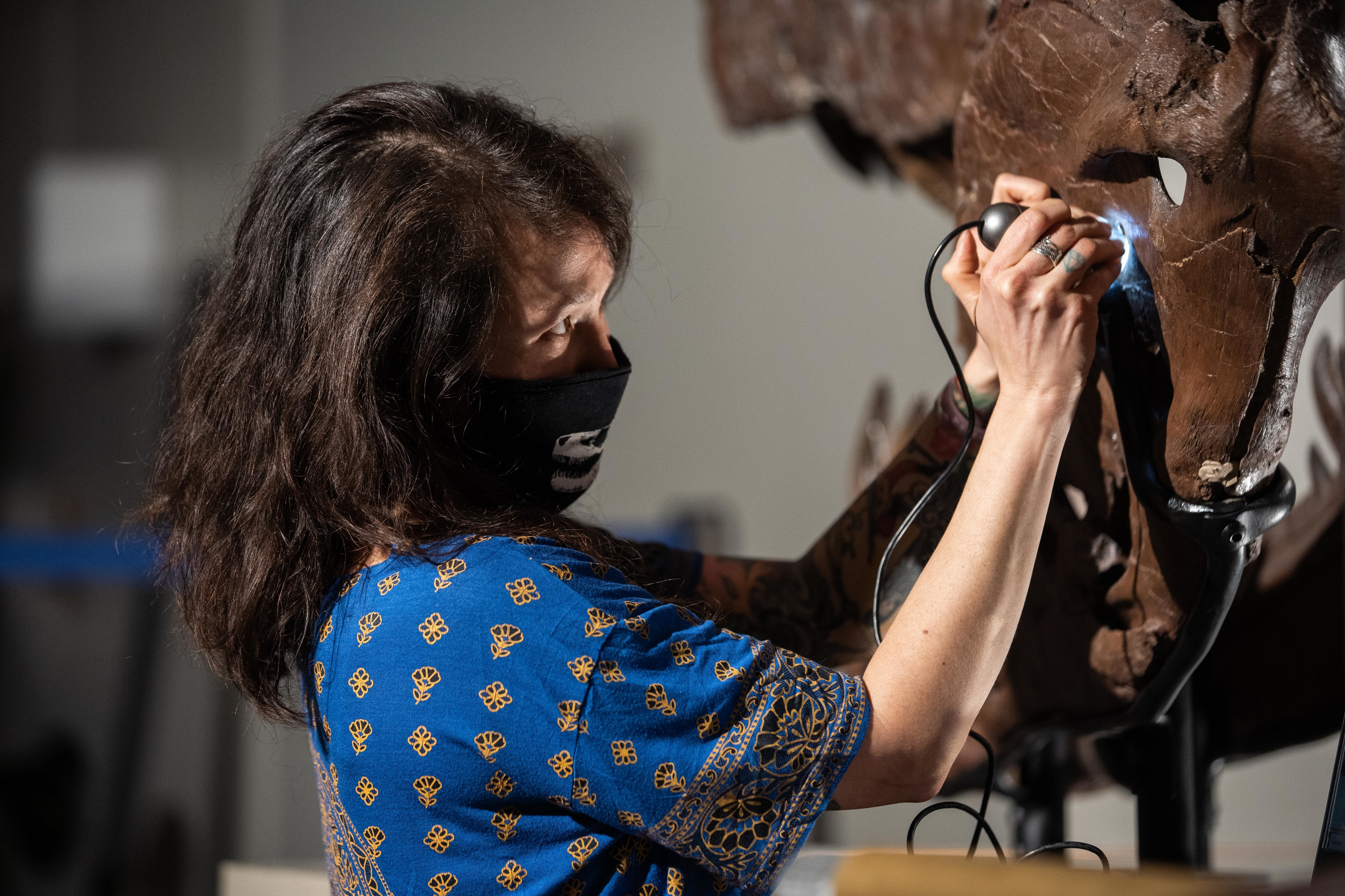 Jingmai O'Connor, the associate curator of fossil reptiles at the Field Museum, examines holes in Sue's jaw using a specialized handheld microscope Wednesday.