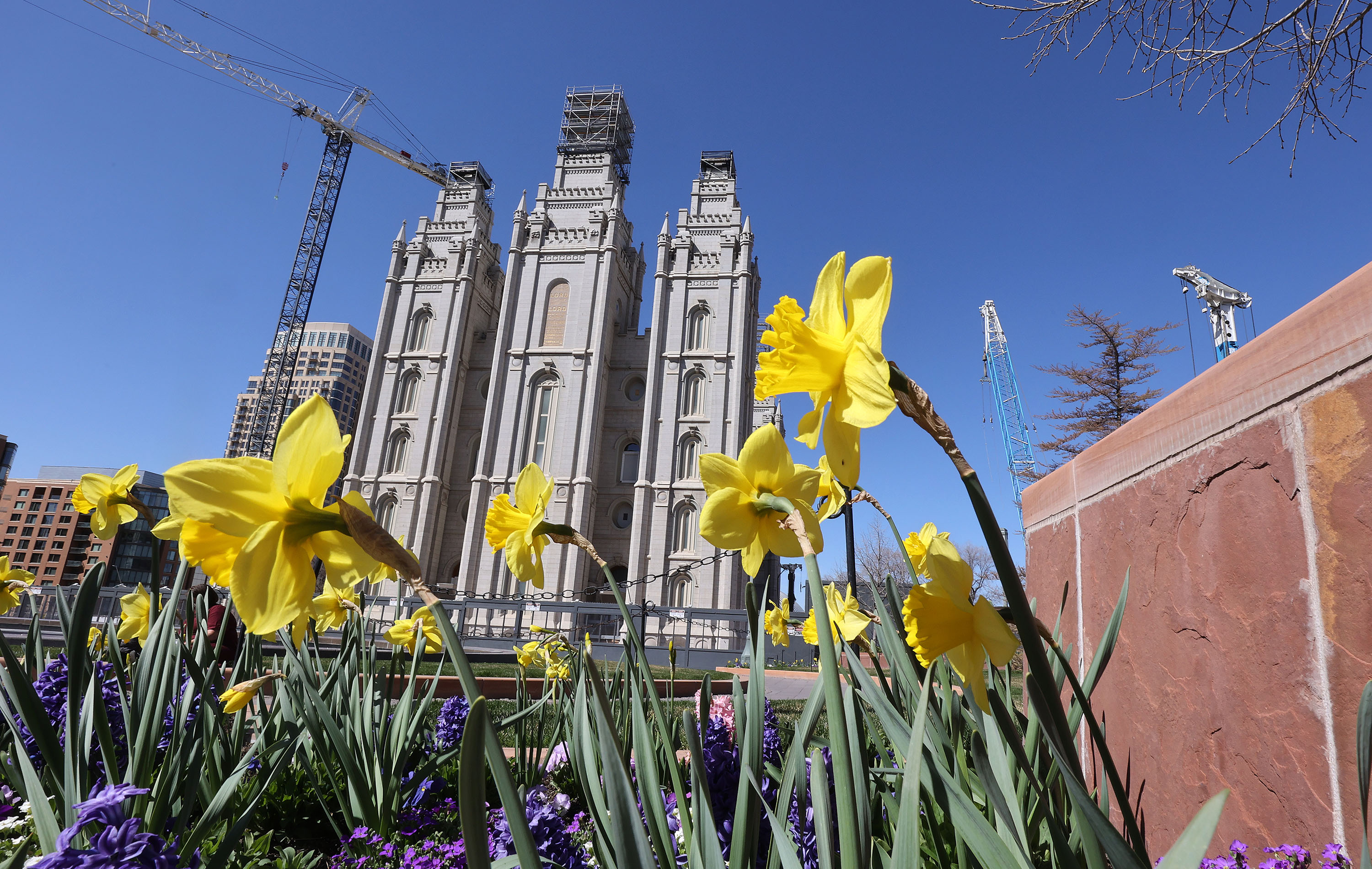 Flowers bloom near the Salt Lake Temple, which is currently under renovation, during the 191st Annual General Conference of The Church of Jesus Christ of Latter-day Saints in Salt Lake City on Saturday, April 3, 2021.