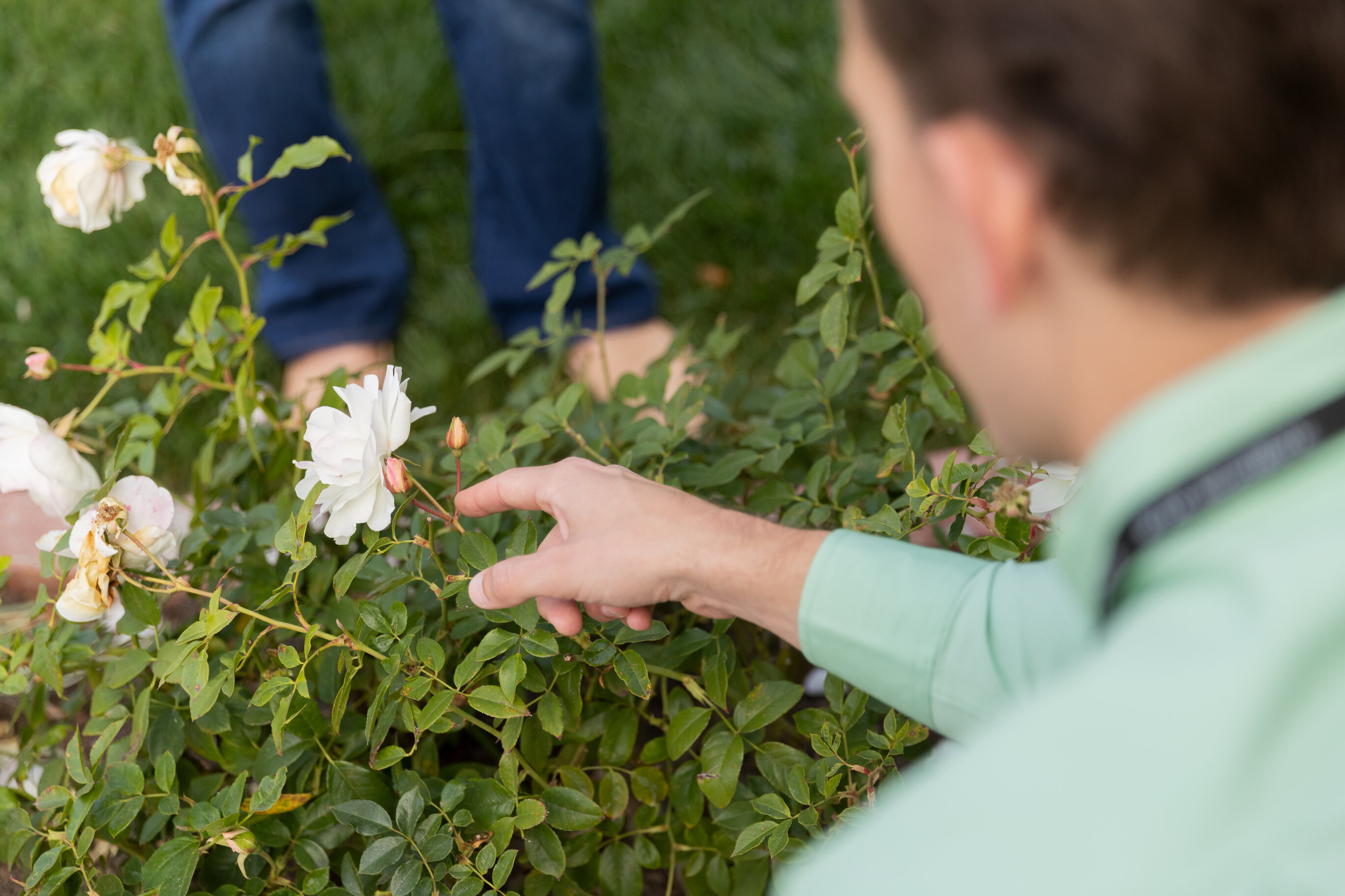A pest control specialist wearing a green shirt points to white flowers on a green bush that have been affected by pests.