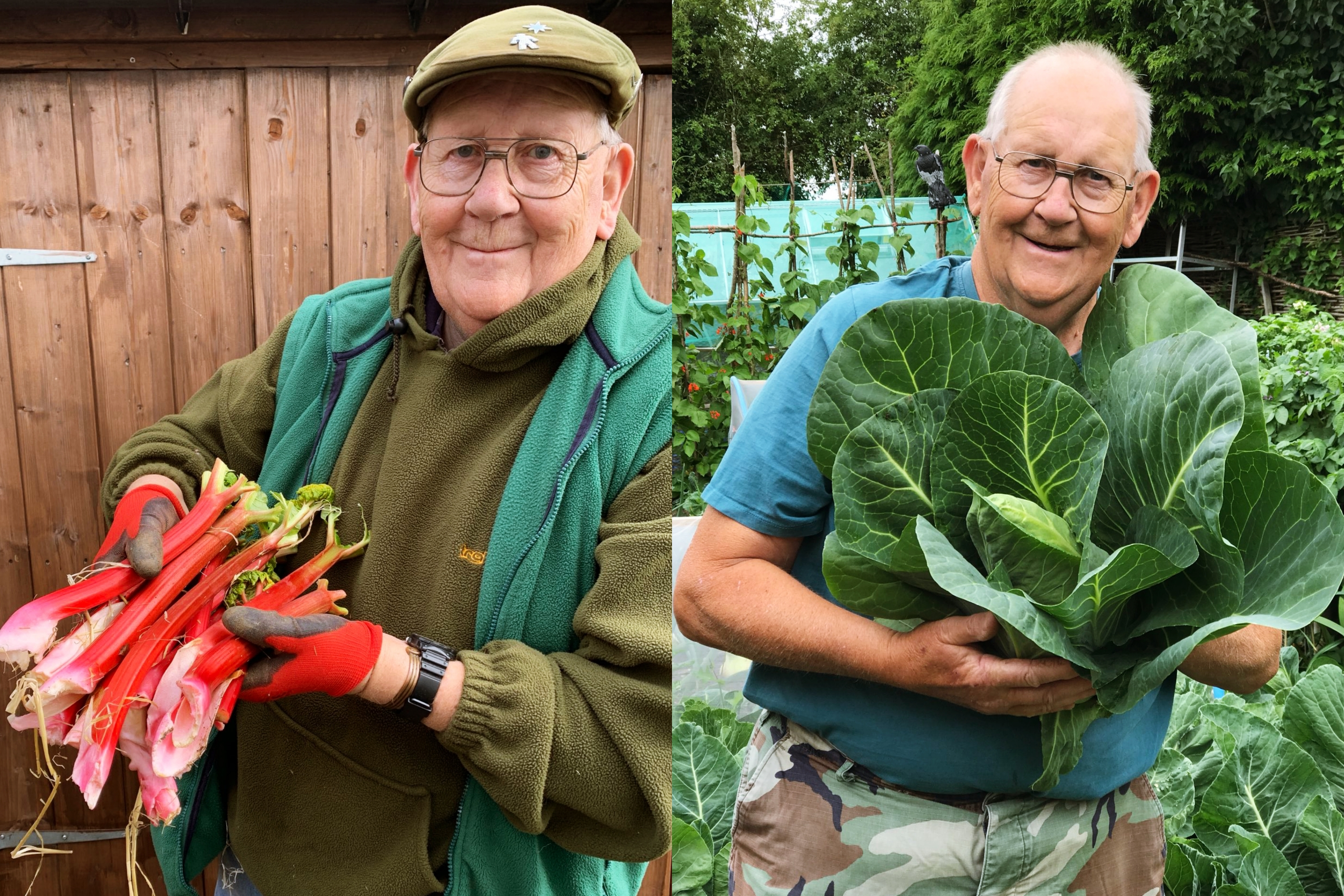 Diptych of a smiling older man holding large handfuls of fresh vegetables and fruits in his garden.