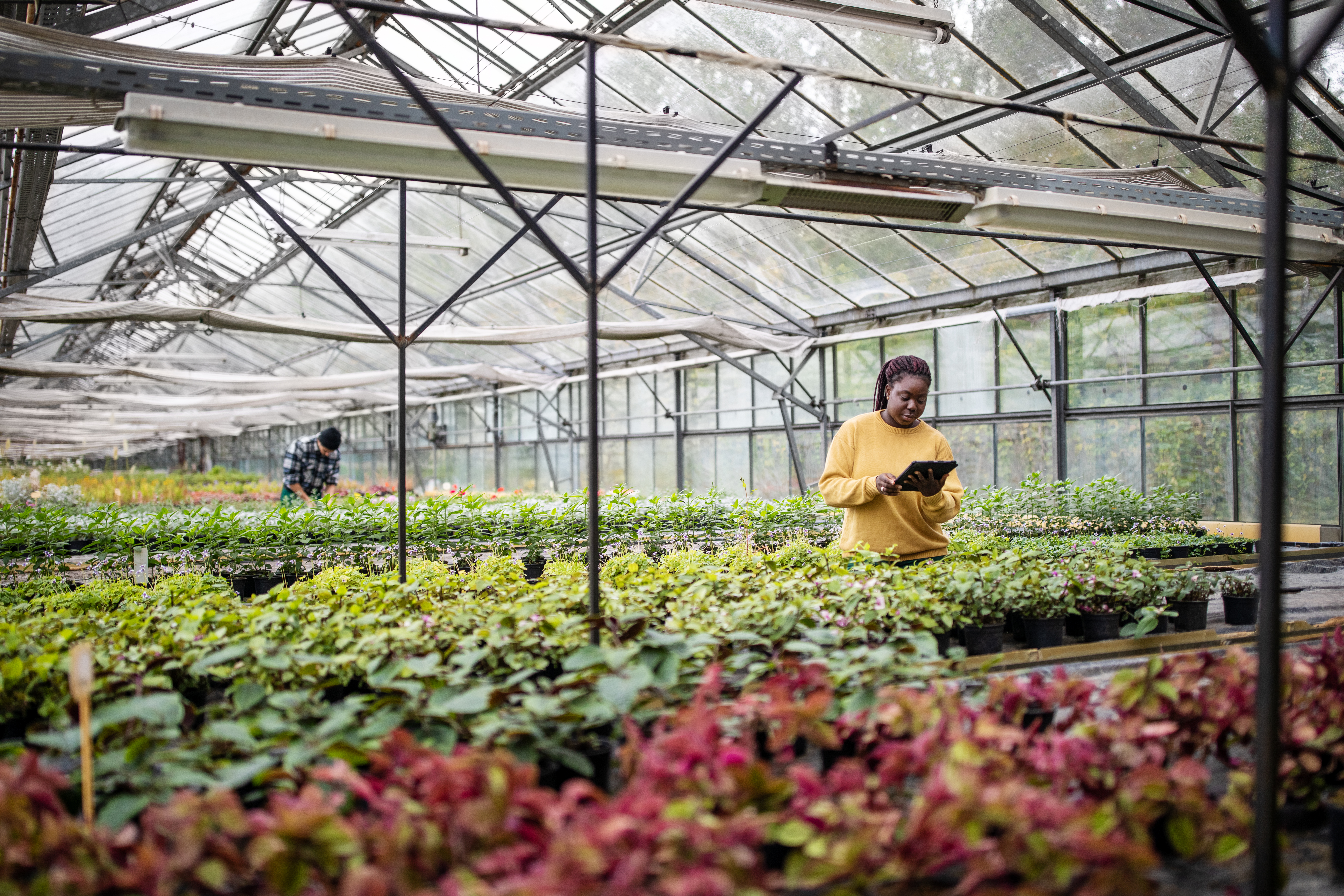 A person using a digital tablet inside a garden center's greenhouse full of plants.
