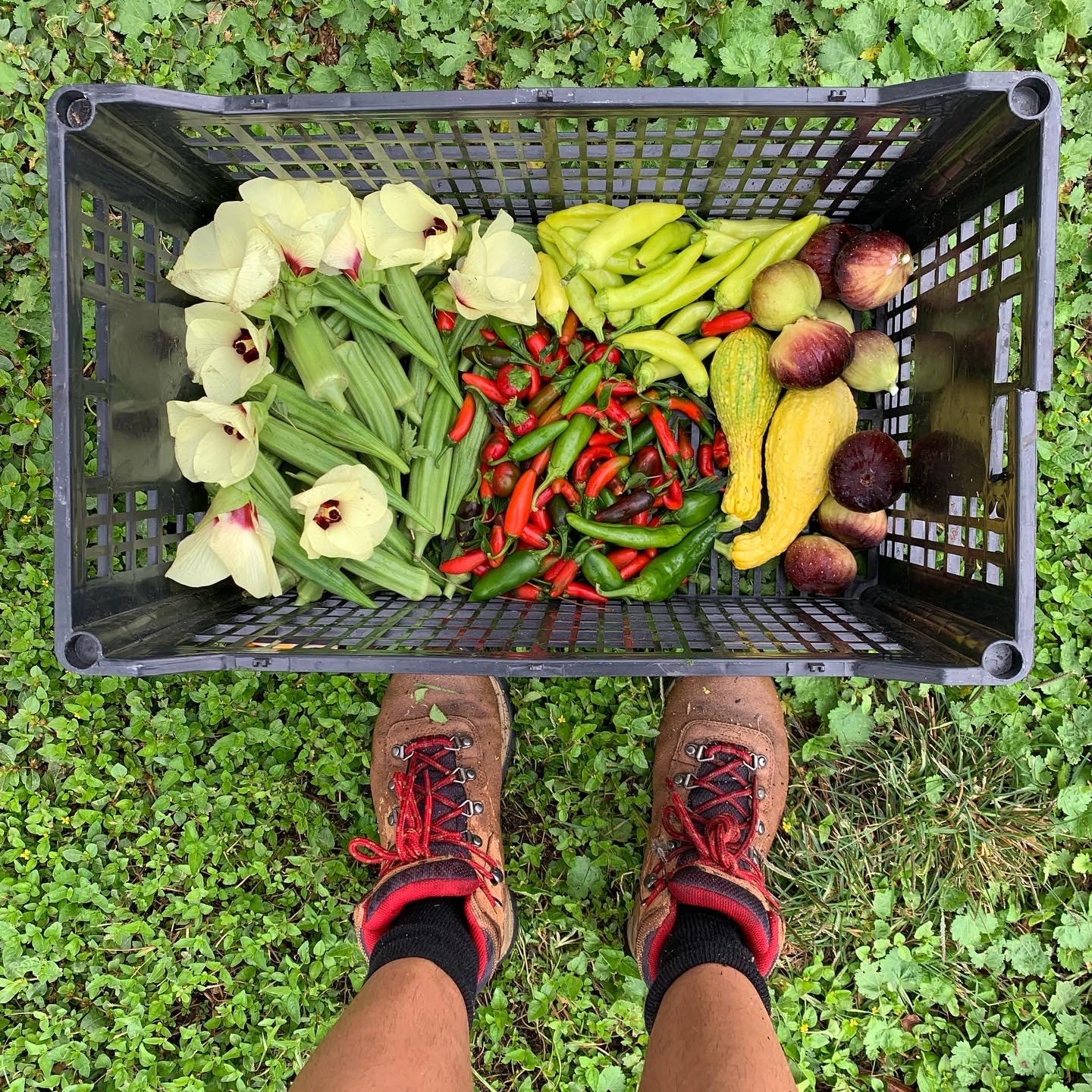 A plastic crate with chilis, squash, okra, and other produce. Two hiking shoes outside the crate.
