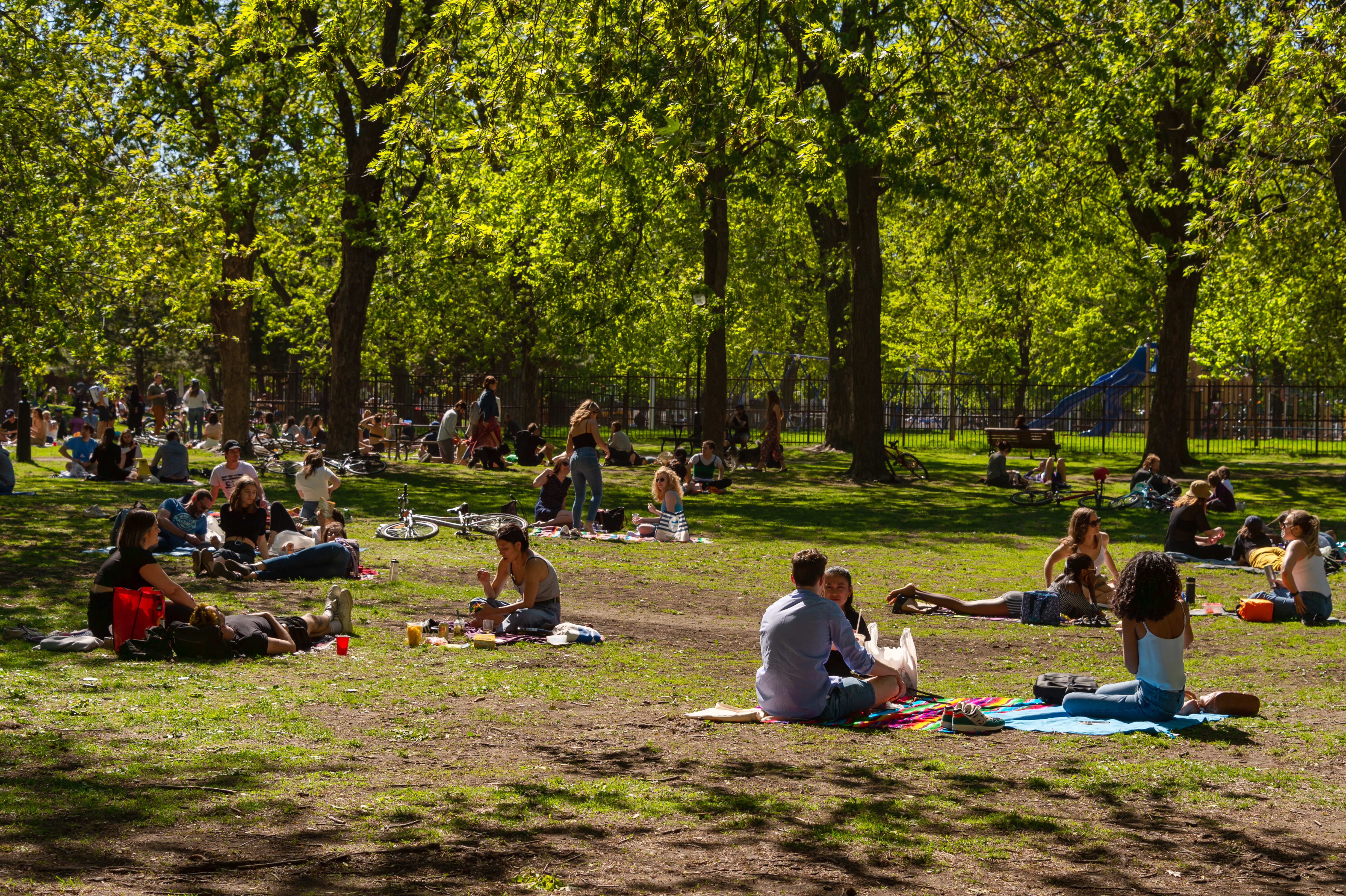 People picnicking in park