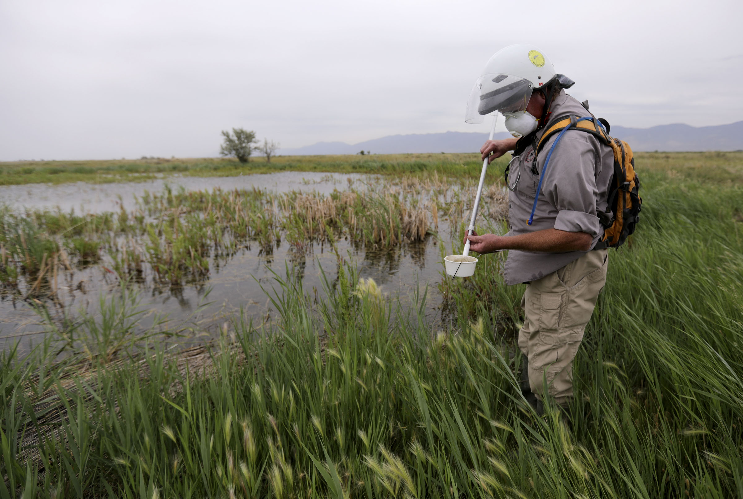 Jason Hardman, Salt Lake City Mosquito Abatement District operations supervisor, pulls a sample of water while demonstrating how he looks for mosquito larvae in Salt Lake City on Wednesday, July 22, 2020.