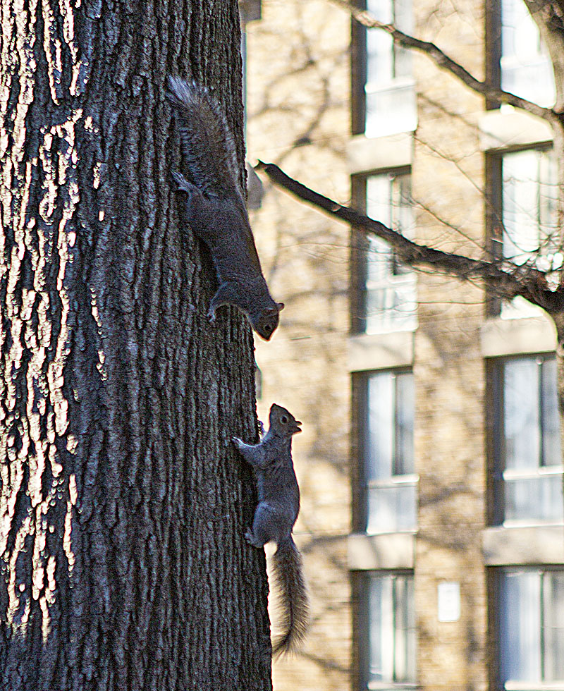 If Buzzard Point Stadium is built, these squirrels will become D.C. United fan favorites.