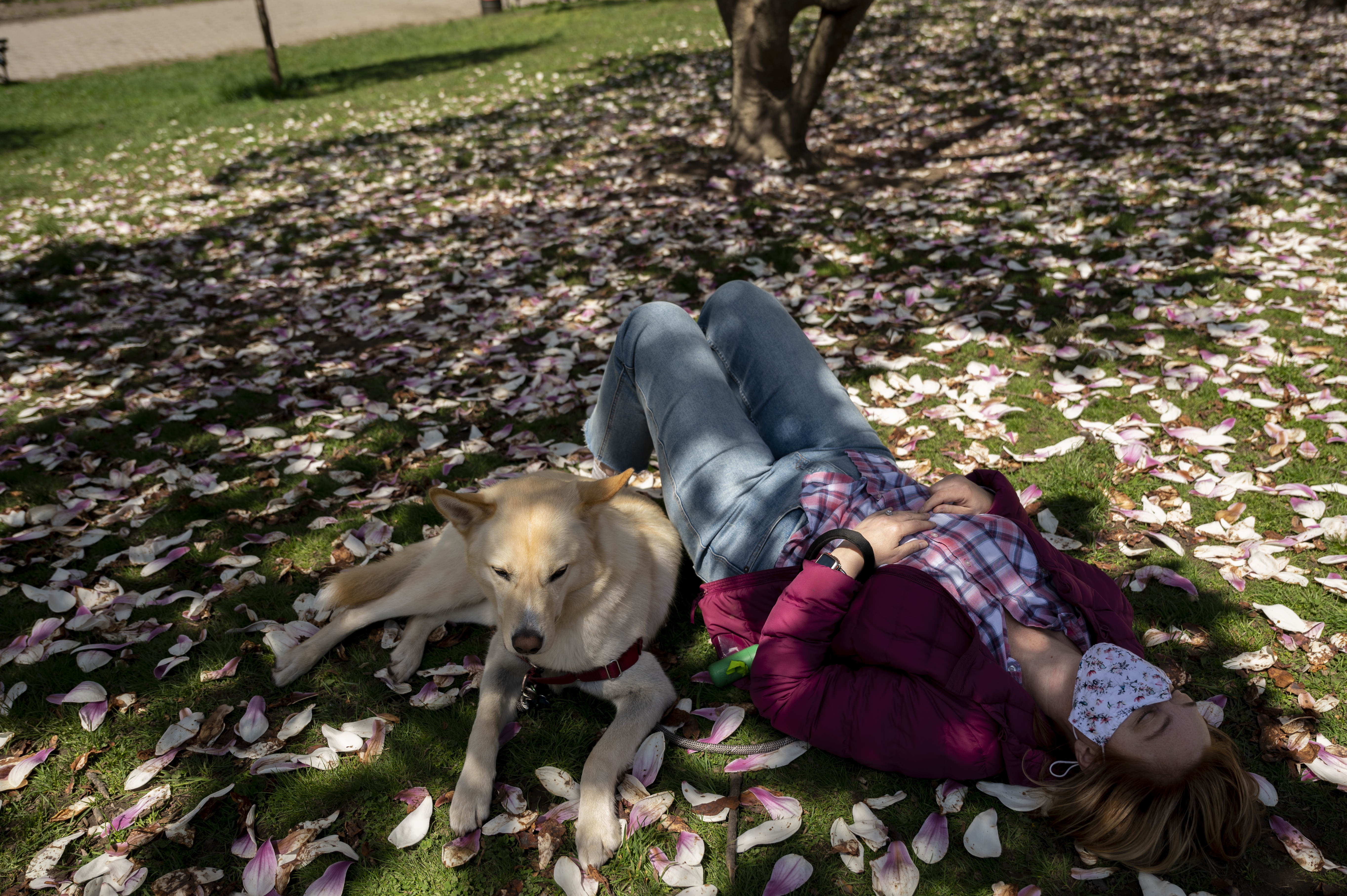A Brooklynite rests under a magnolia tree with their dog in Prospect Park.