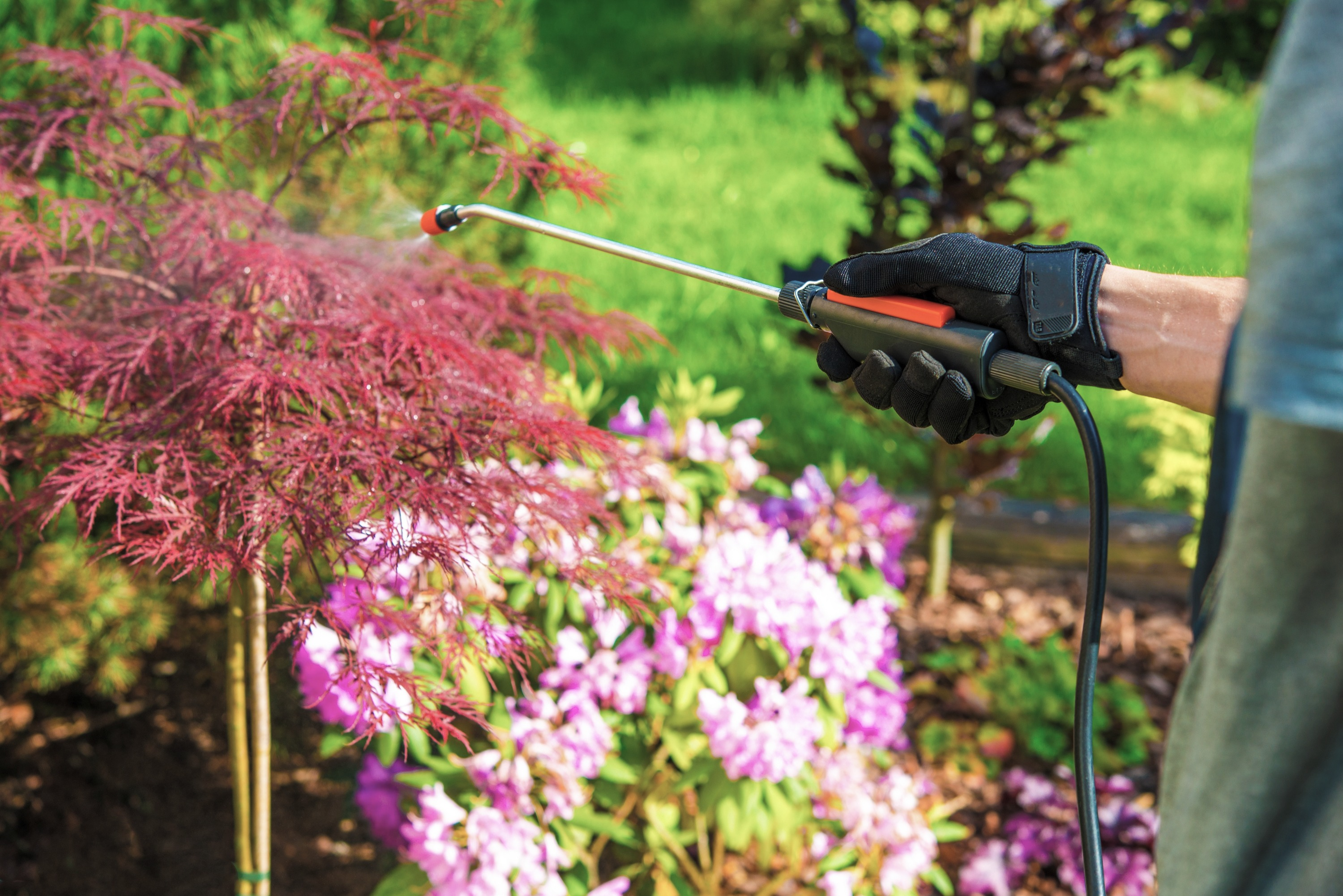 A pest control specialist wearing a dark green shirt and black gloves holds a red and silver pest control wand that sprays solution on a Japanese maple tree and pink flowering plants.