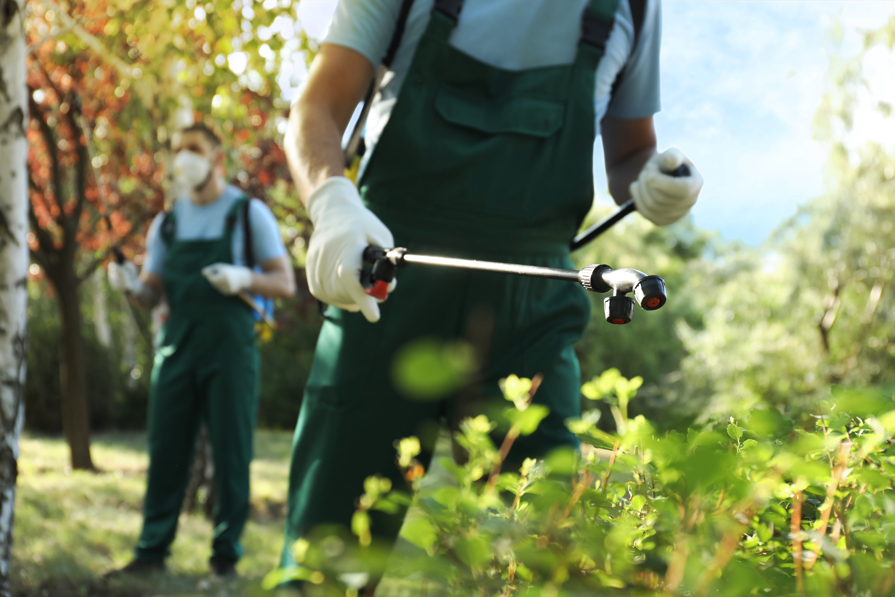 A pest control specialist wearing dark green overalls uses a pest control wand to spray solution on green bushes.