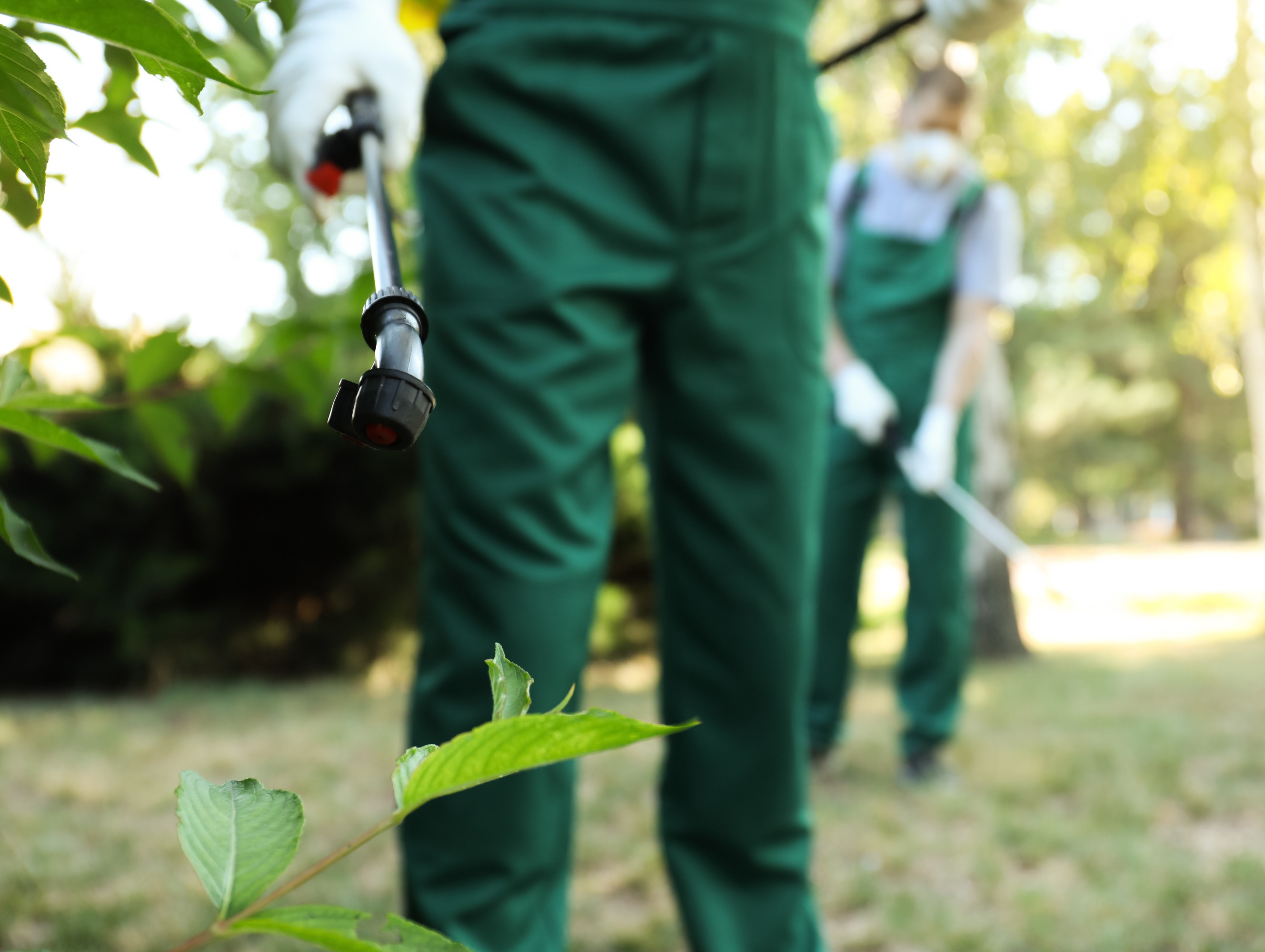 A pest control specialist wearing green overalls uses a pest control want to spray solution on a green bush.