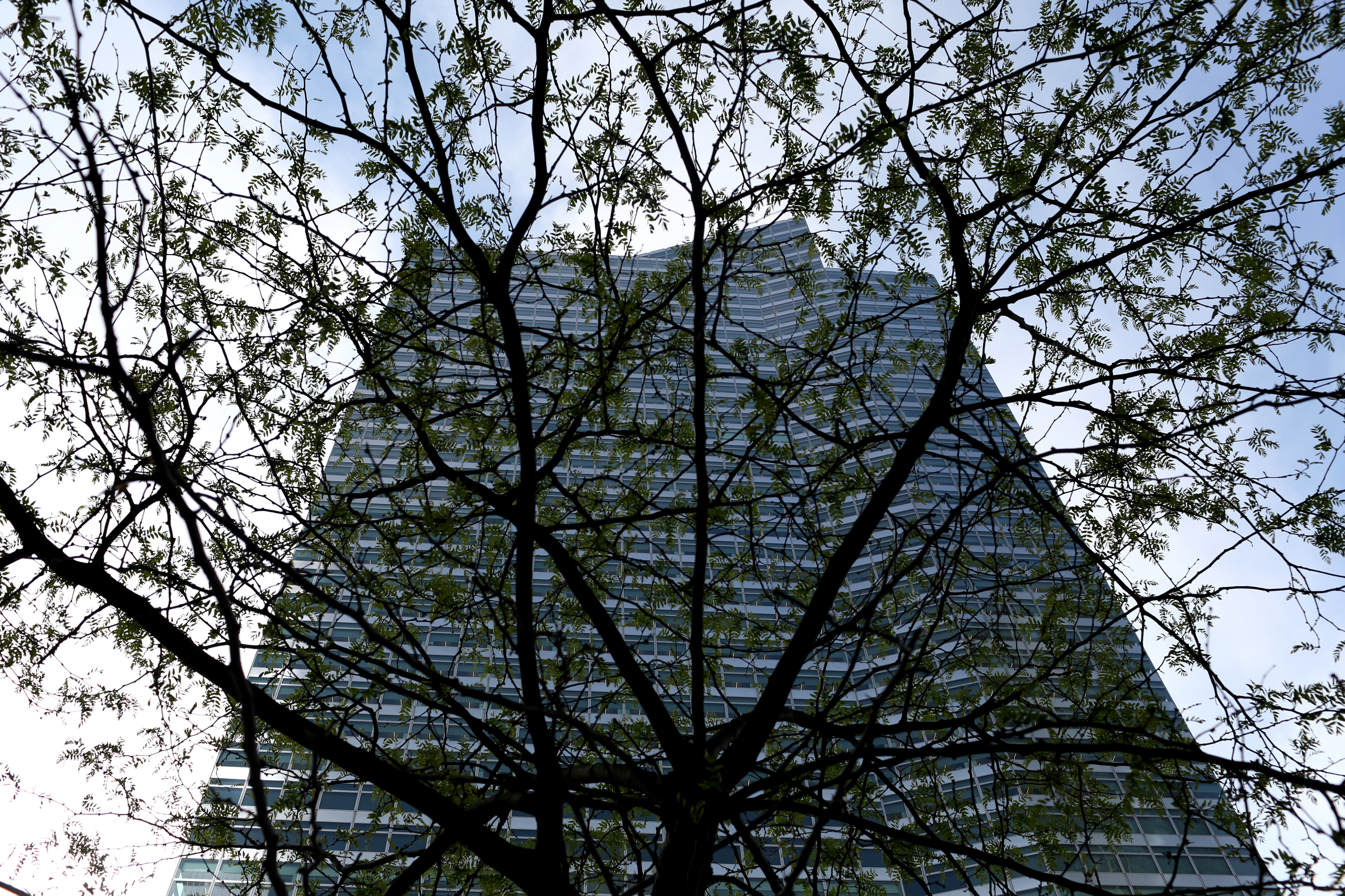 A tree grows in front of Goldman Sachs headquarters at 200 West Street, in Manhattan. May 5, 2021.