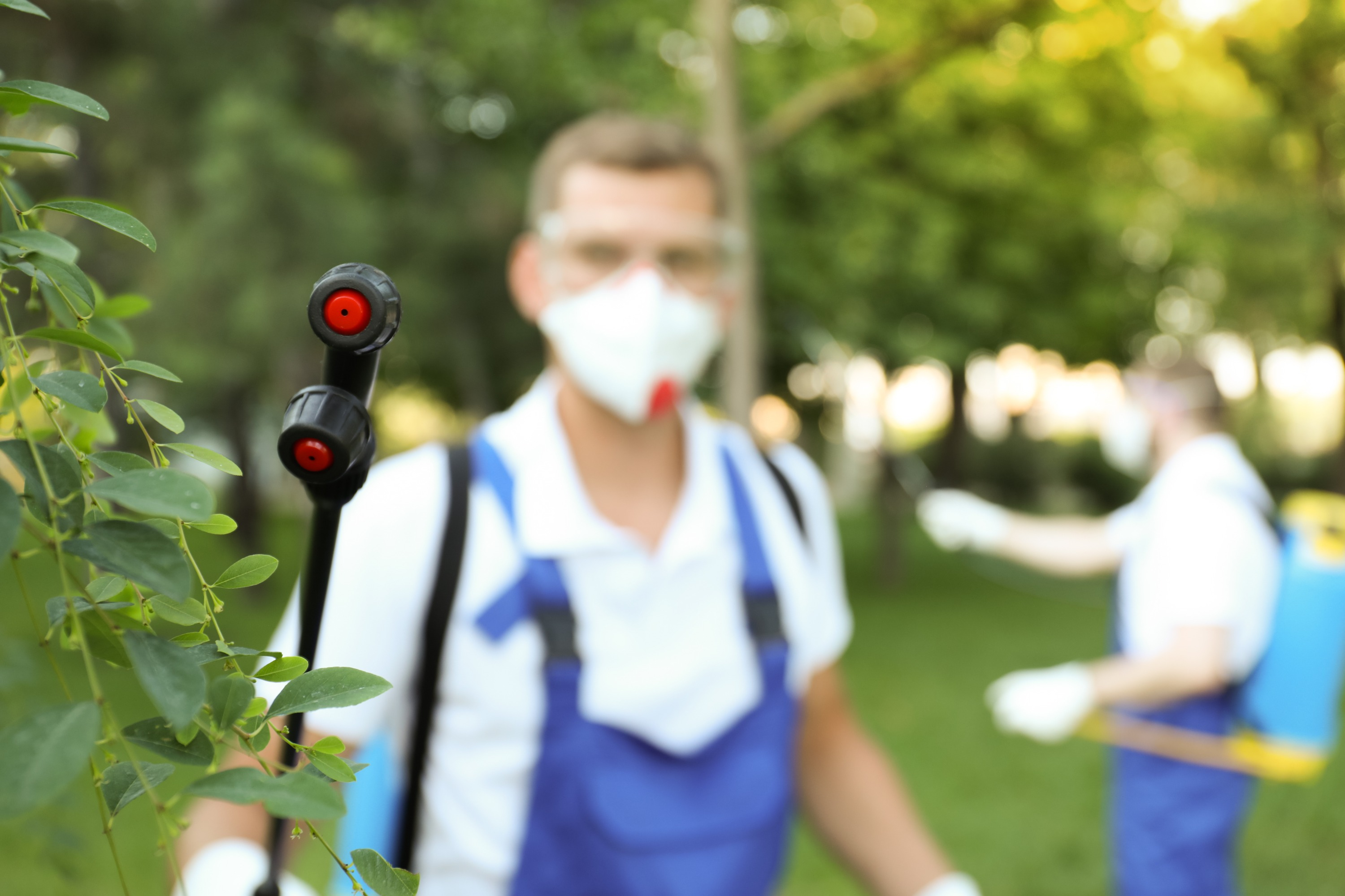 A pest control specialist wearing blue overalls, a white short-sleeved collard shirt, protective eyewear, and white gloves uses a black wand to spray pest control solution on a green bush.