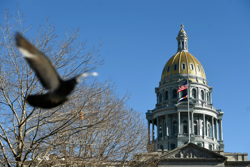 On the right, the dome of the Colorado State Capitol rises above a leafless tree and a pigeon taking flight.