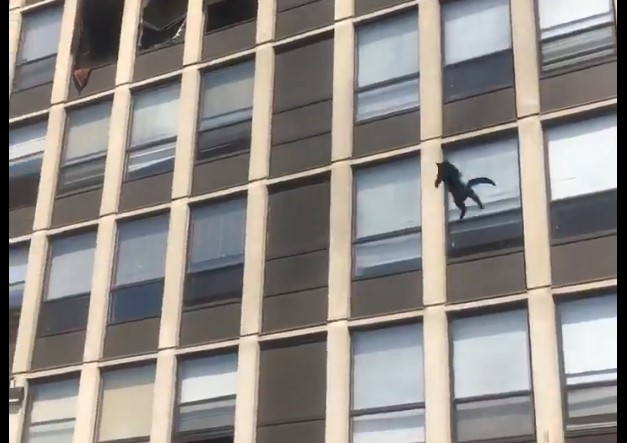 Screenshot of a video showing a cat leap from a building to escape a fire May 13, 2021, in Englewood.