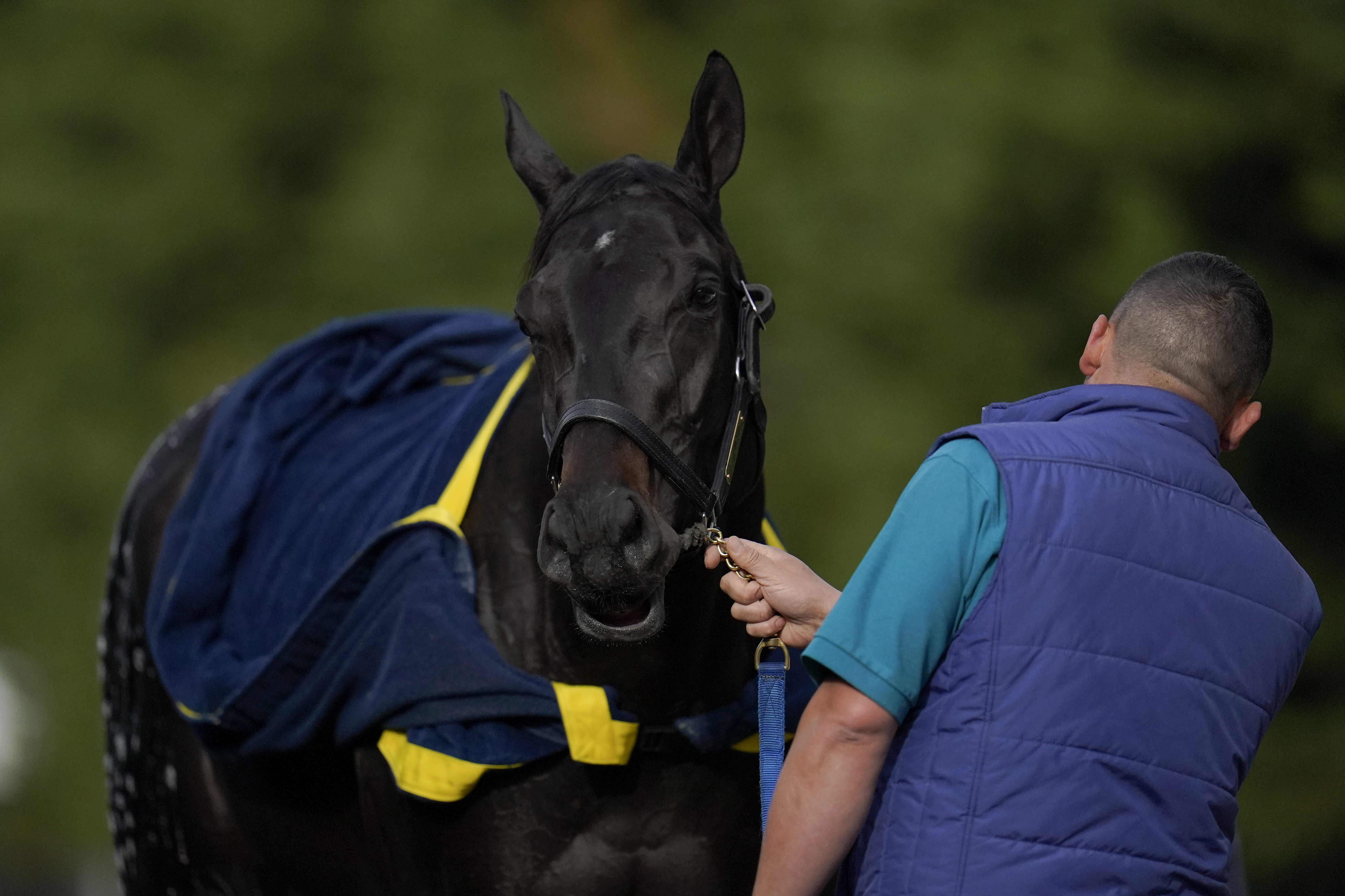 Kentucky Derby winner and Preakness entrant Medina Spirit passed all drug tests and will be allowed to run in the second jewel of the Triple Crown.