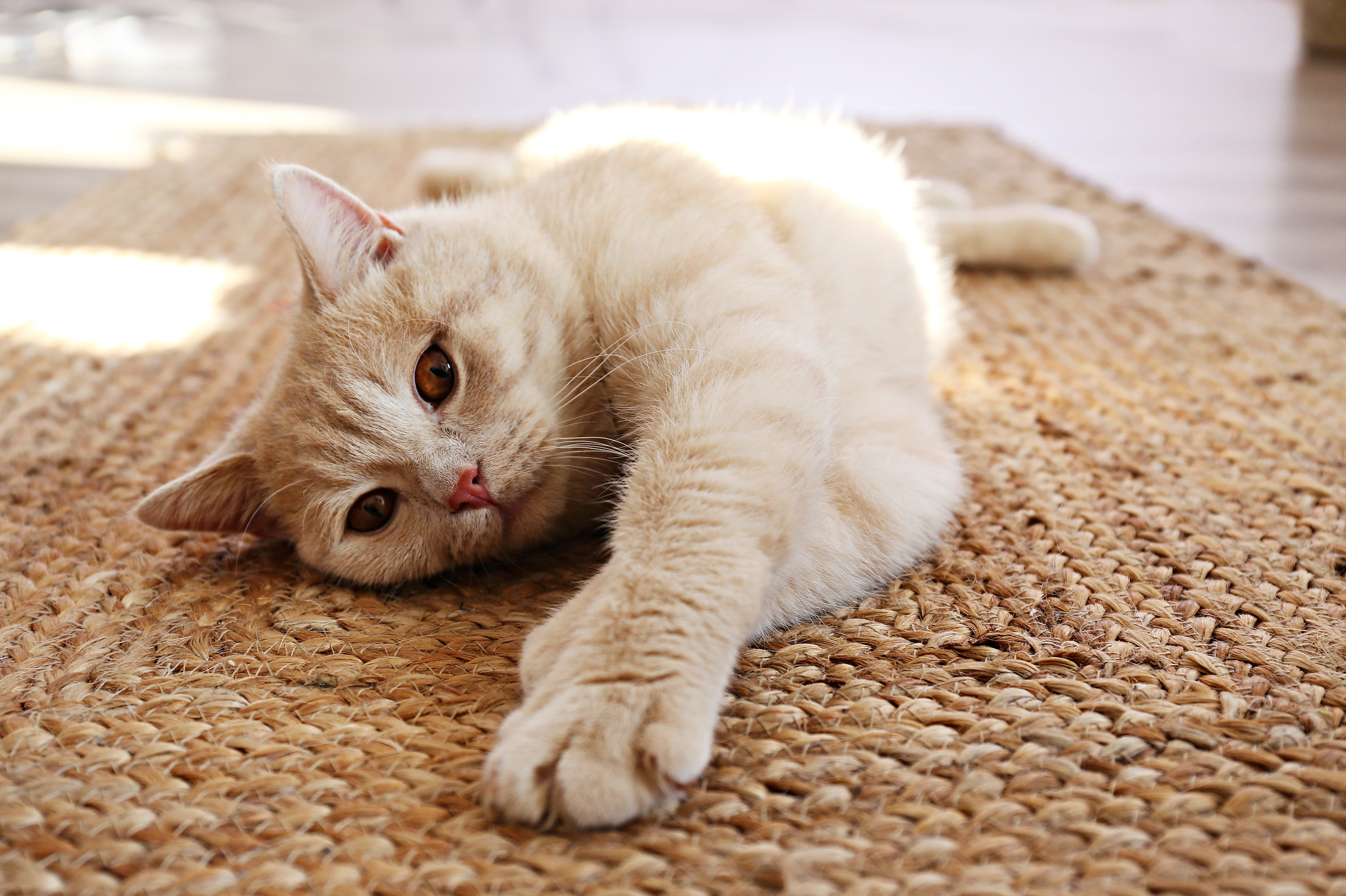 A light orange cat lays on a brown textured rug in the interior of a home.