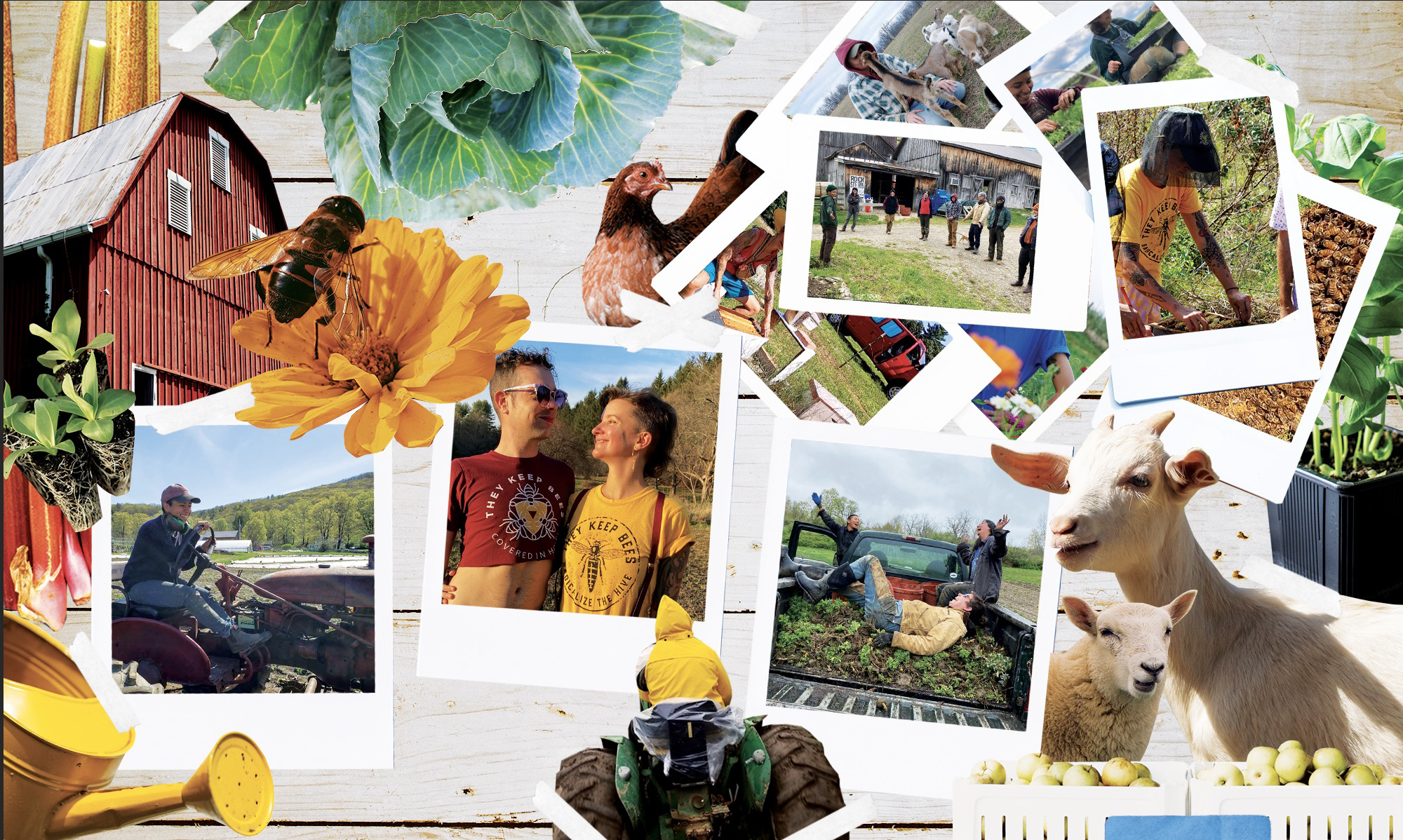 Photo collage of various scenes on different farms.