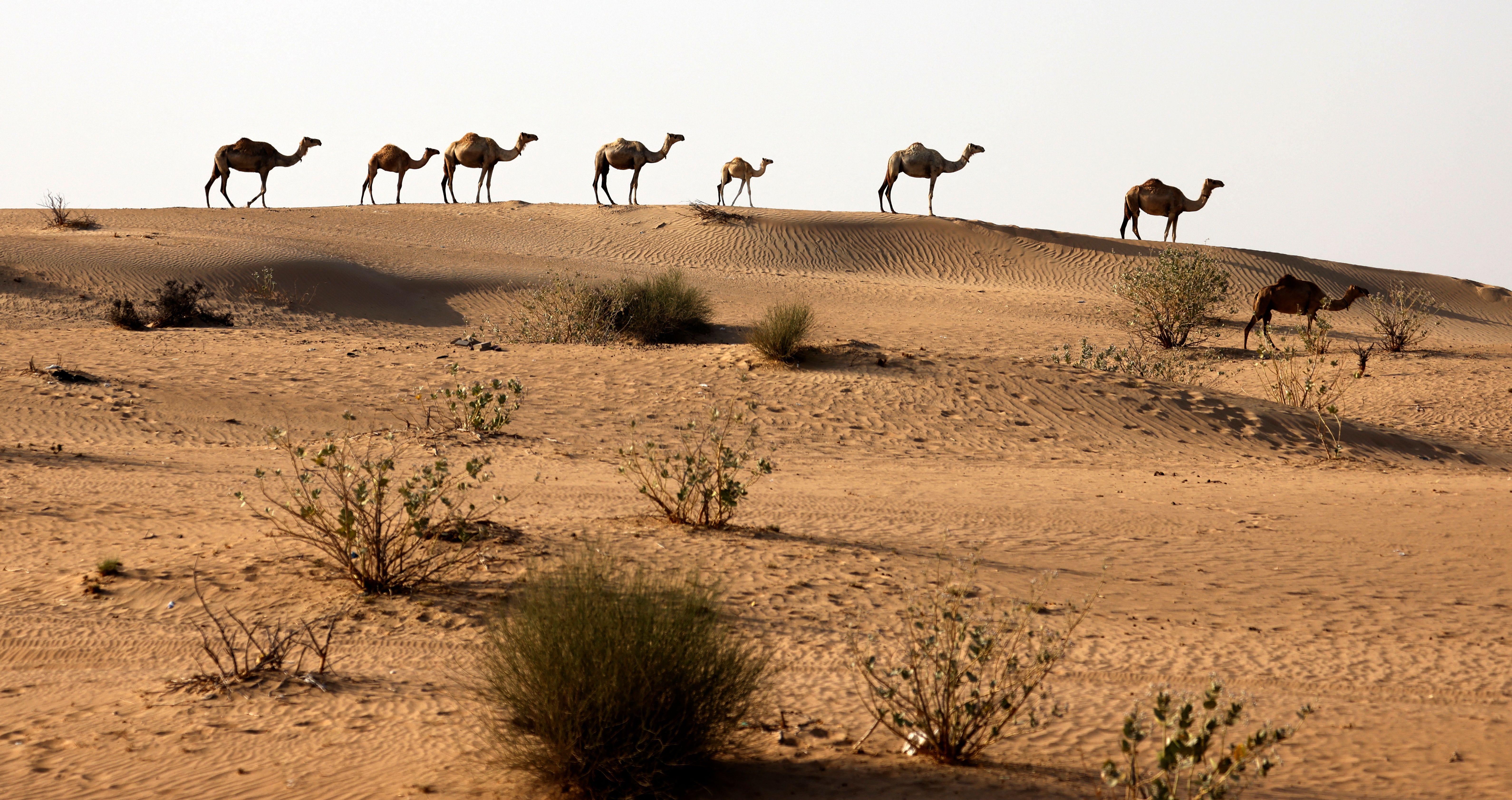 UAE-DESERT-ANIMALS