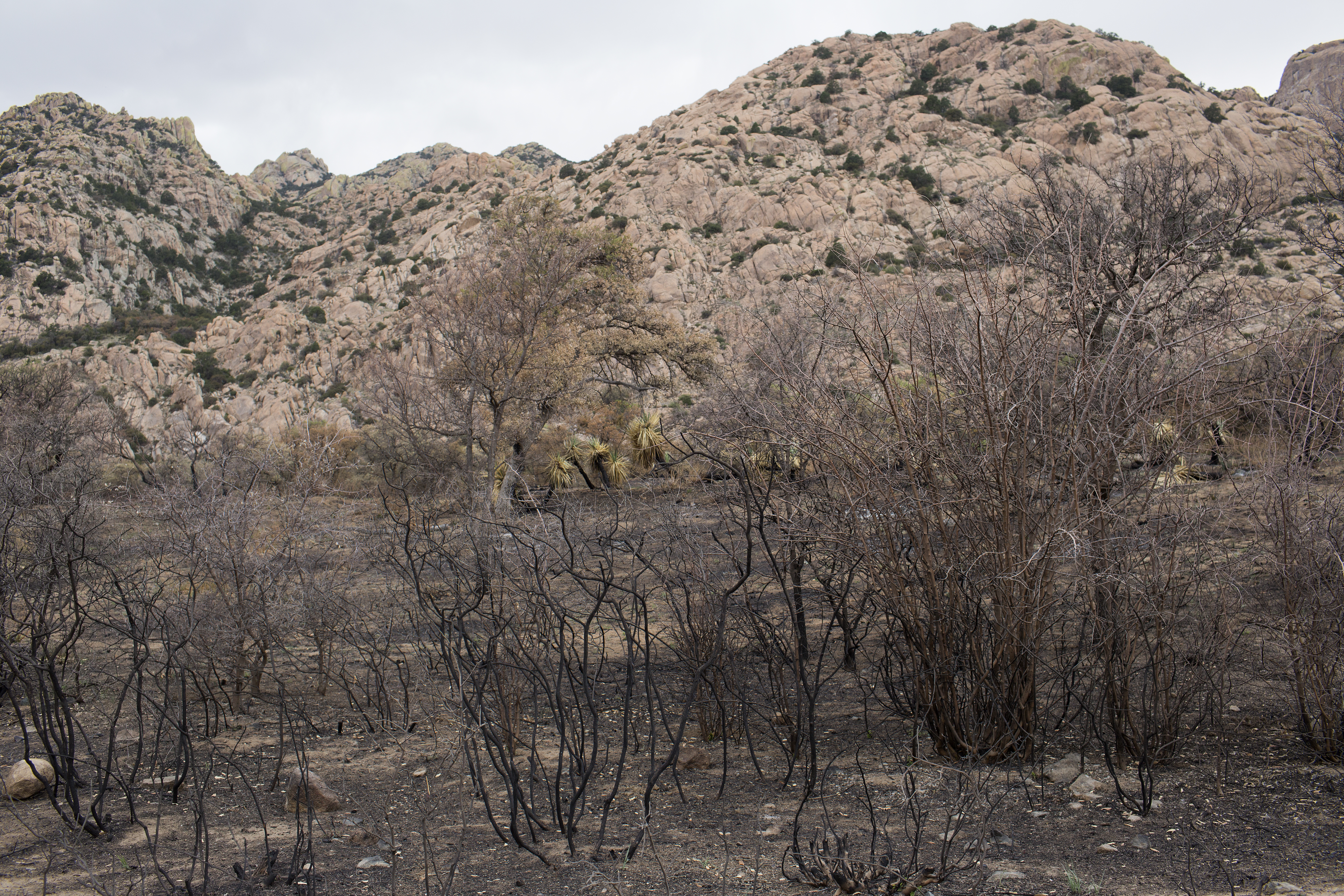 COCHISE STRONGHOLD, ARIZONA - APRIL 18: A recent forest fire burned out a campground, April 18, 2021, in the Dragoon Mountains of Eastern Arizona.
